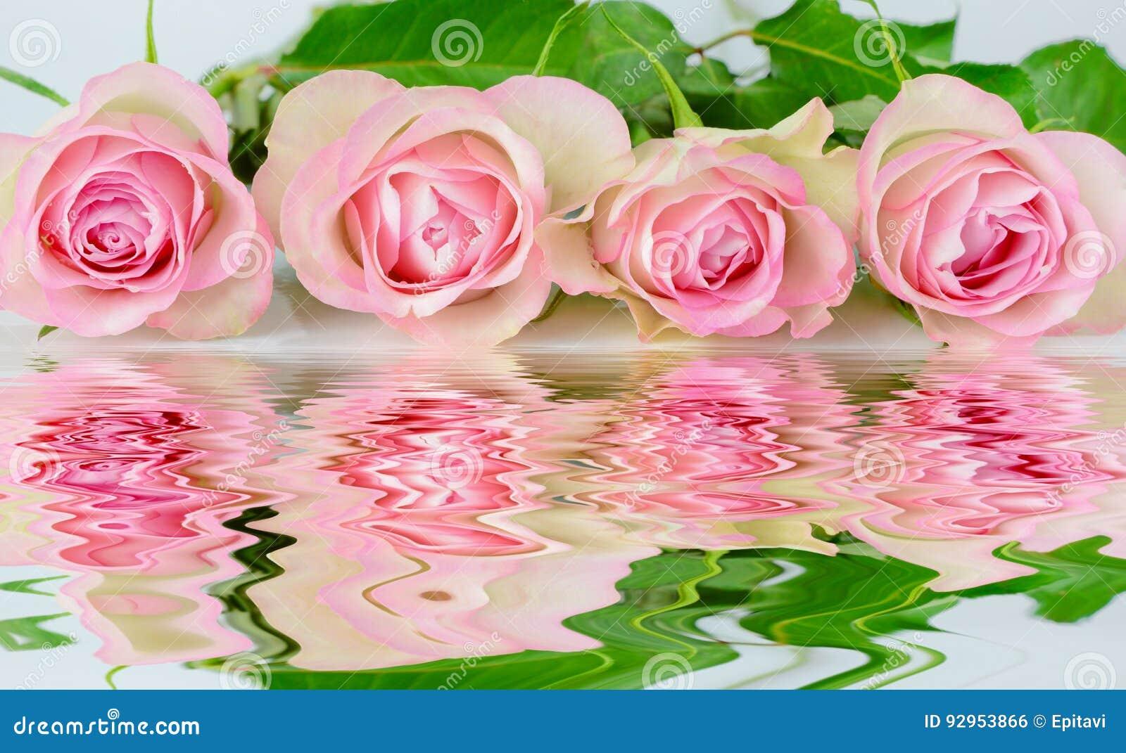 Quatro rosas cor-de-rosa