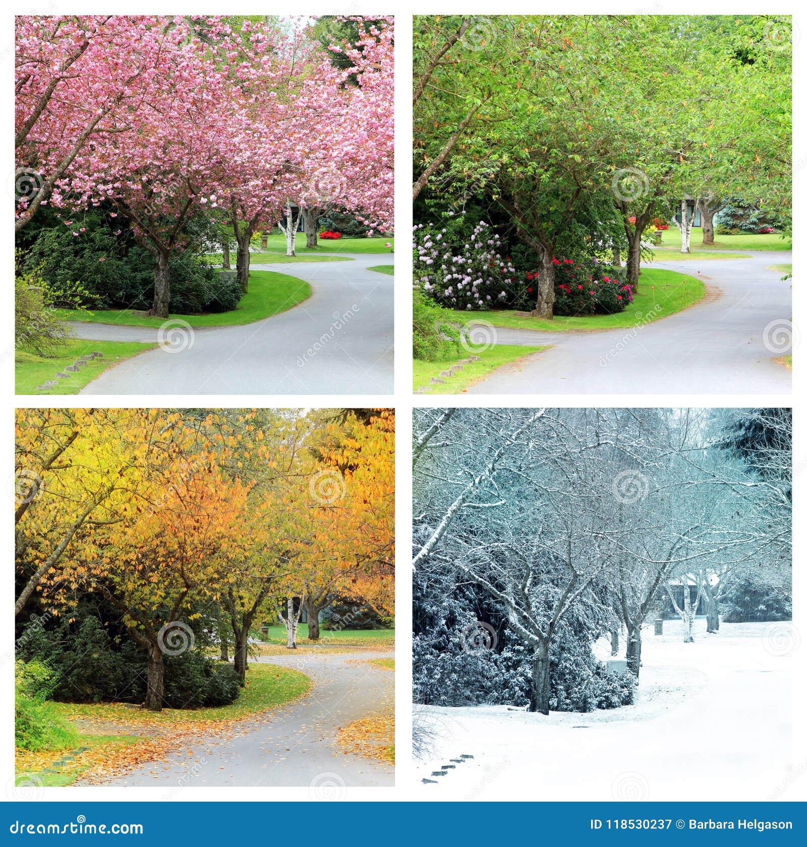 Quattro stagioni della stessa via