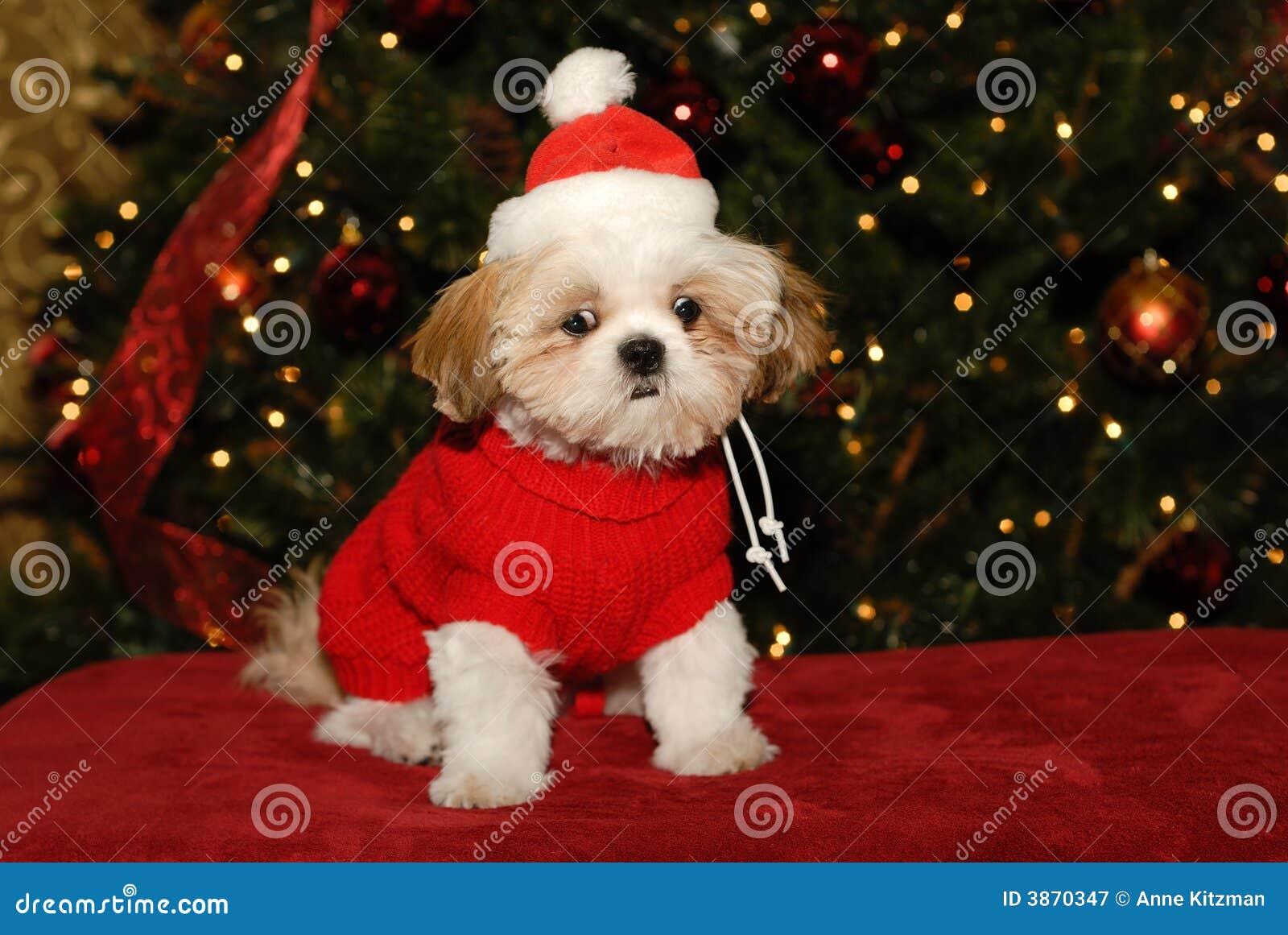 Que Você Significa Nenhum Papai Noel Imagem De Stock