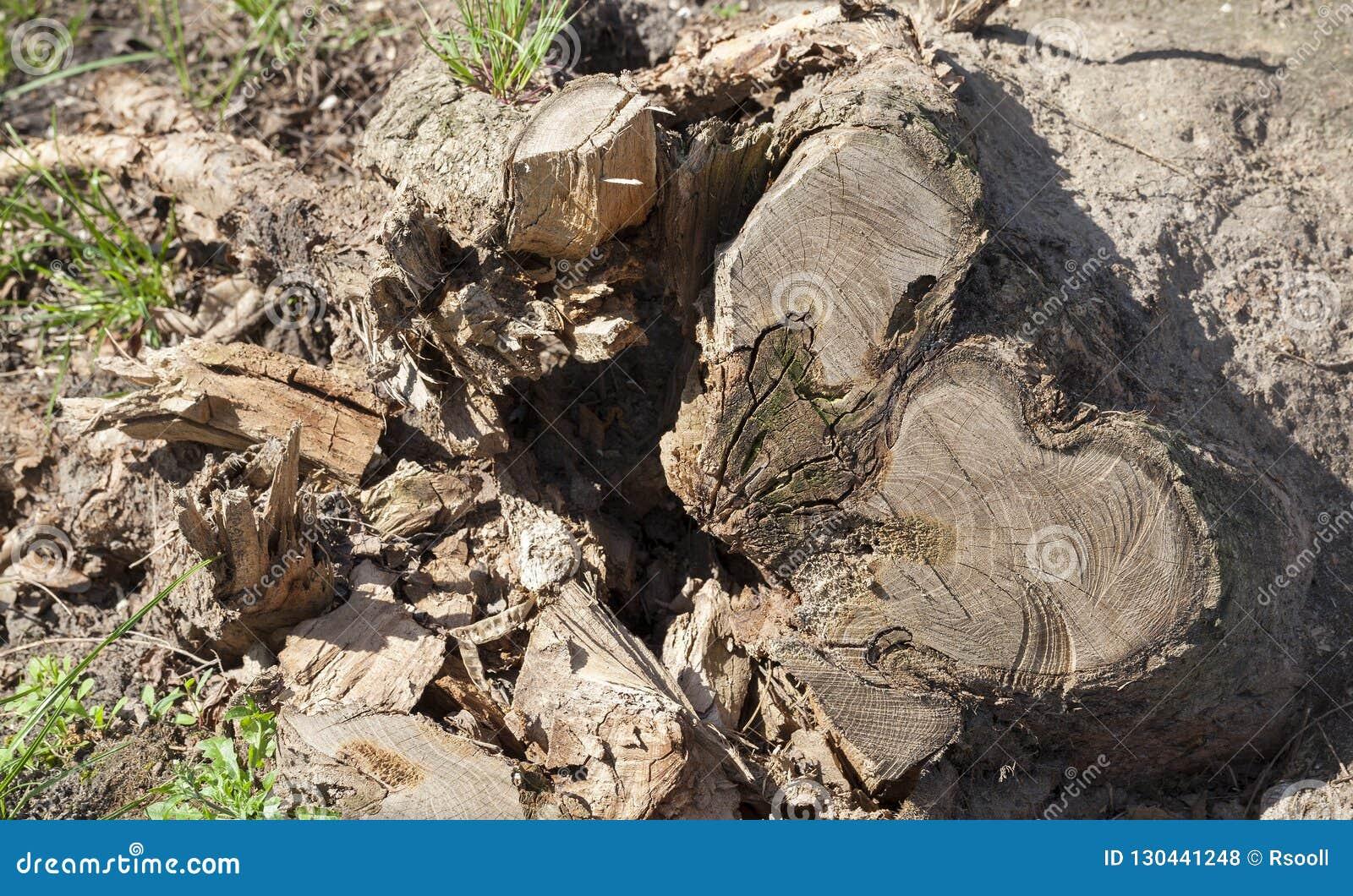 Quebra da árvore do tronco
