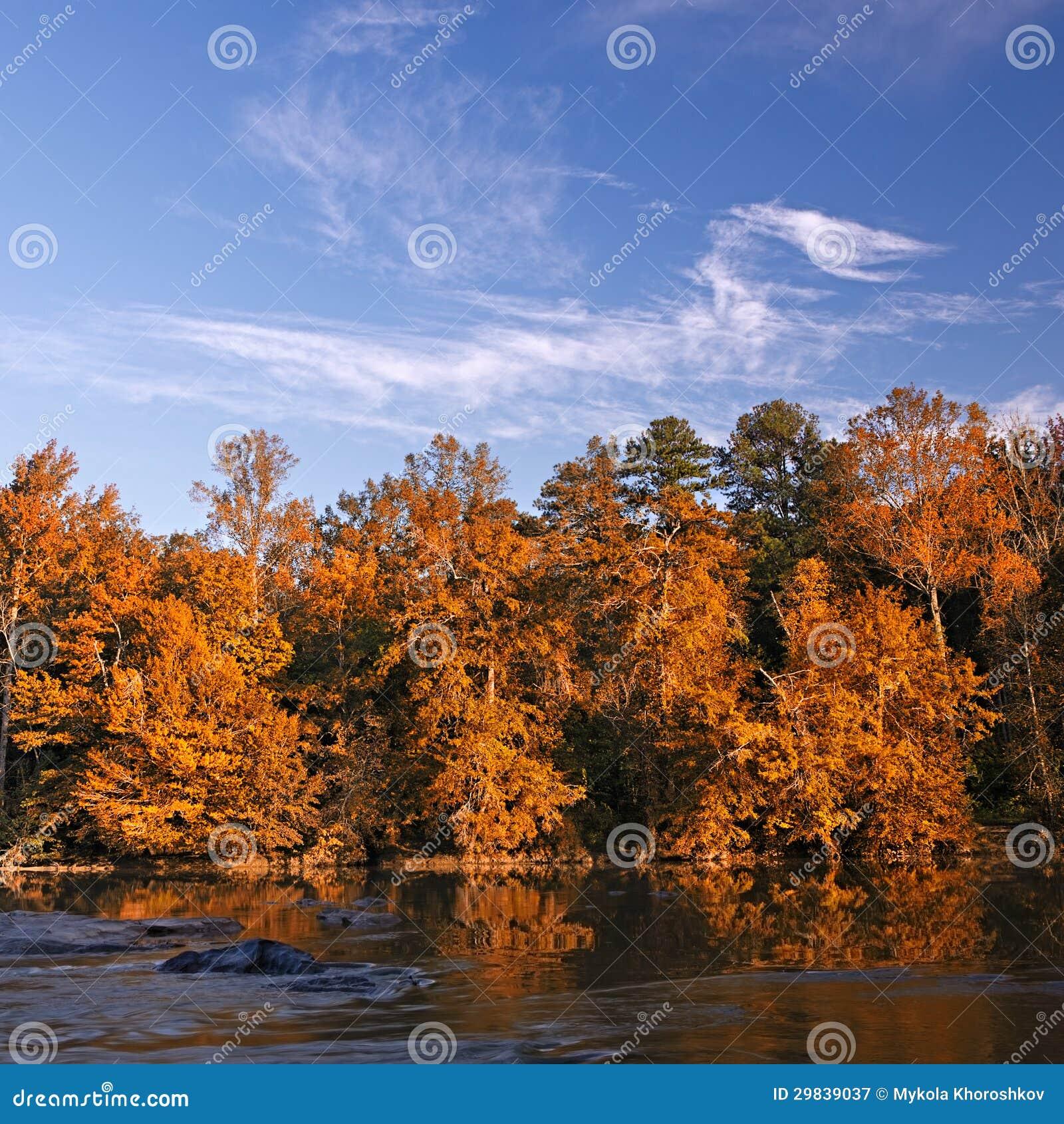 A queda bonita colore a floresta