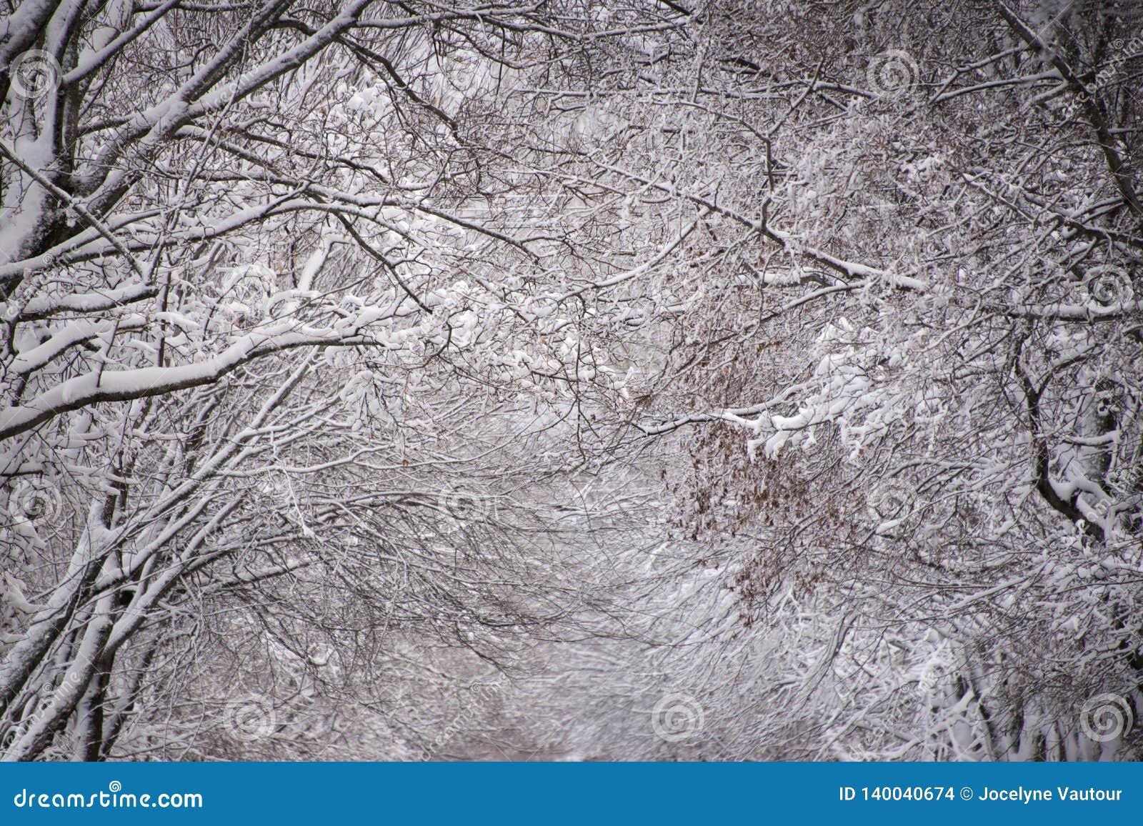 Queda fresca da neve em árvores Aturdindo a composição Sala para o texto