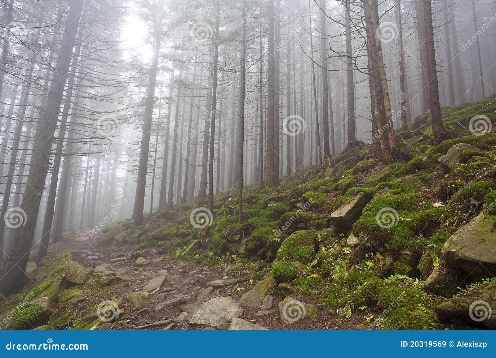 Queda mágica da floresta com névoa