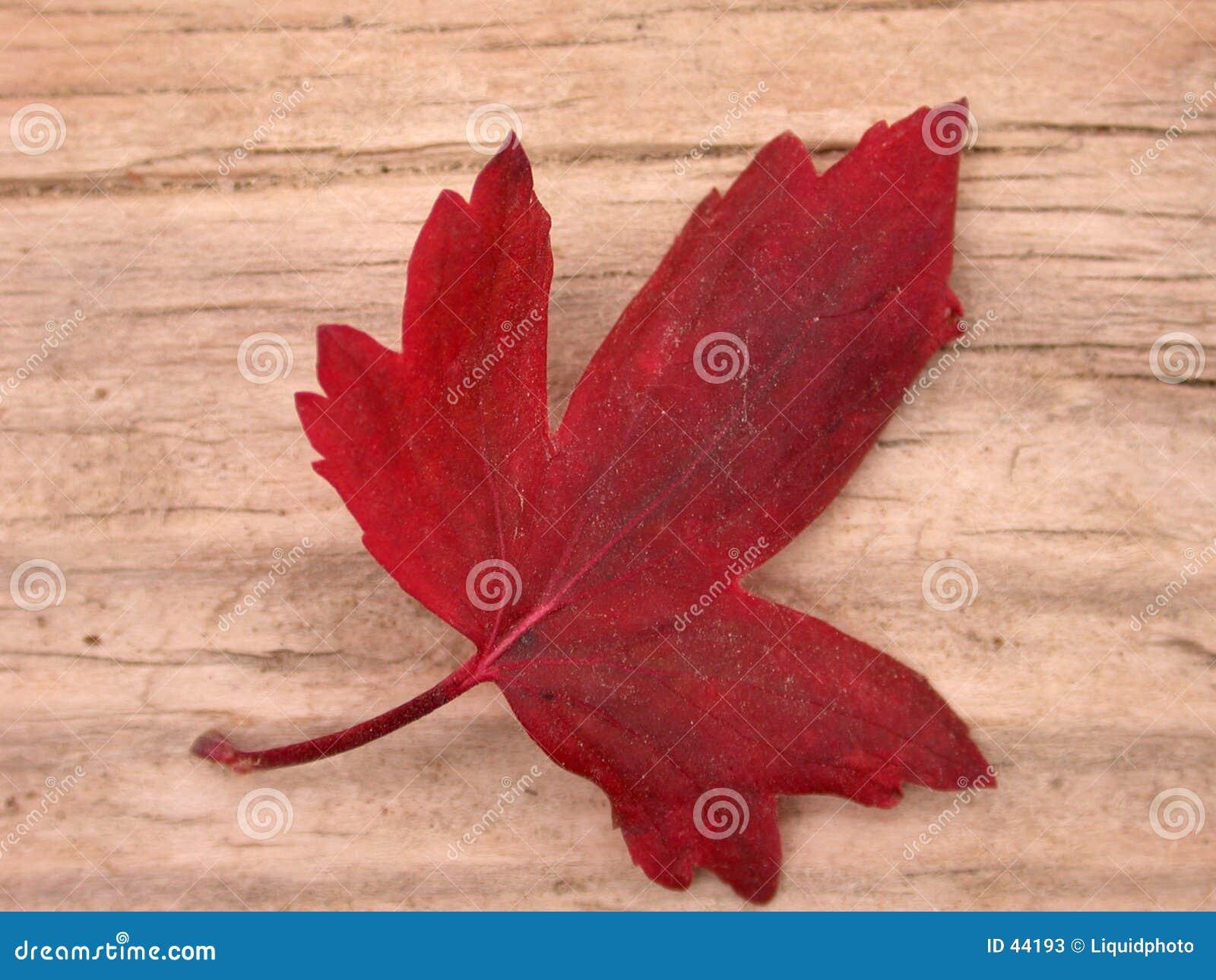 Queda vermelha da folha