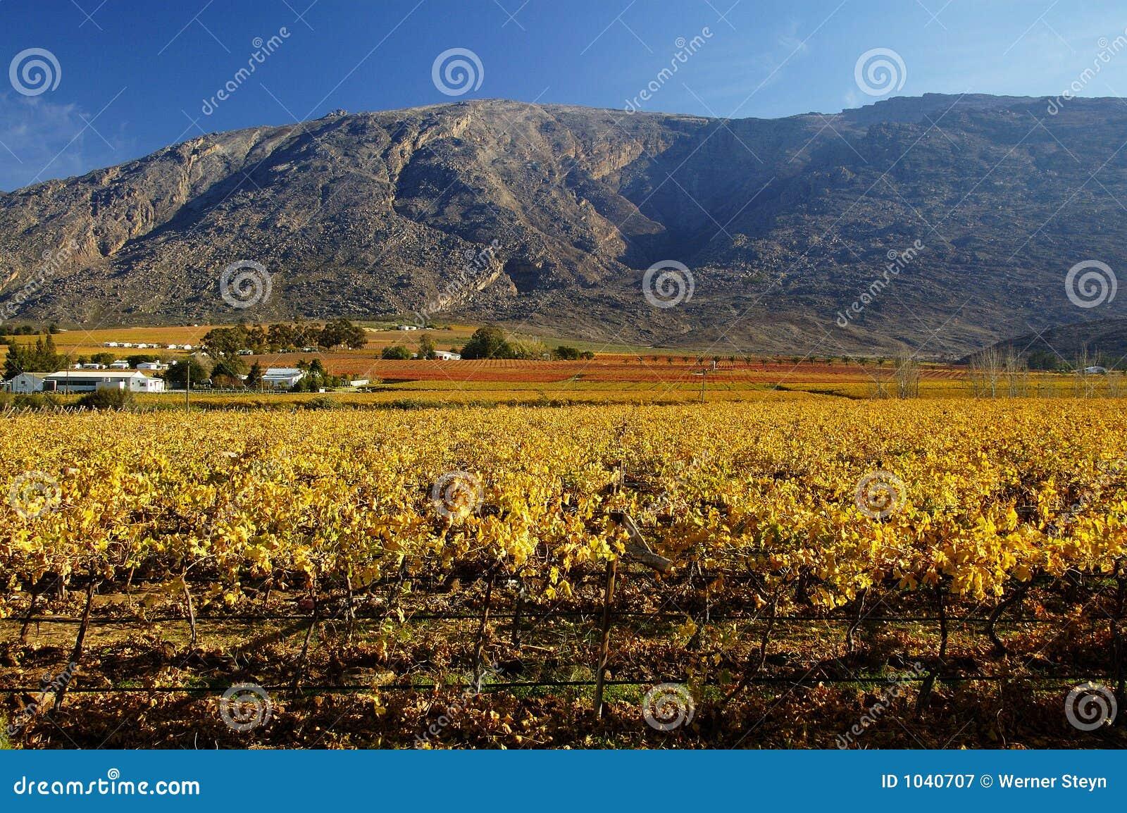 Queda Vineyards15