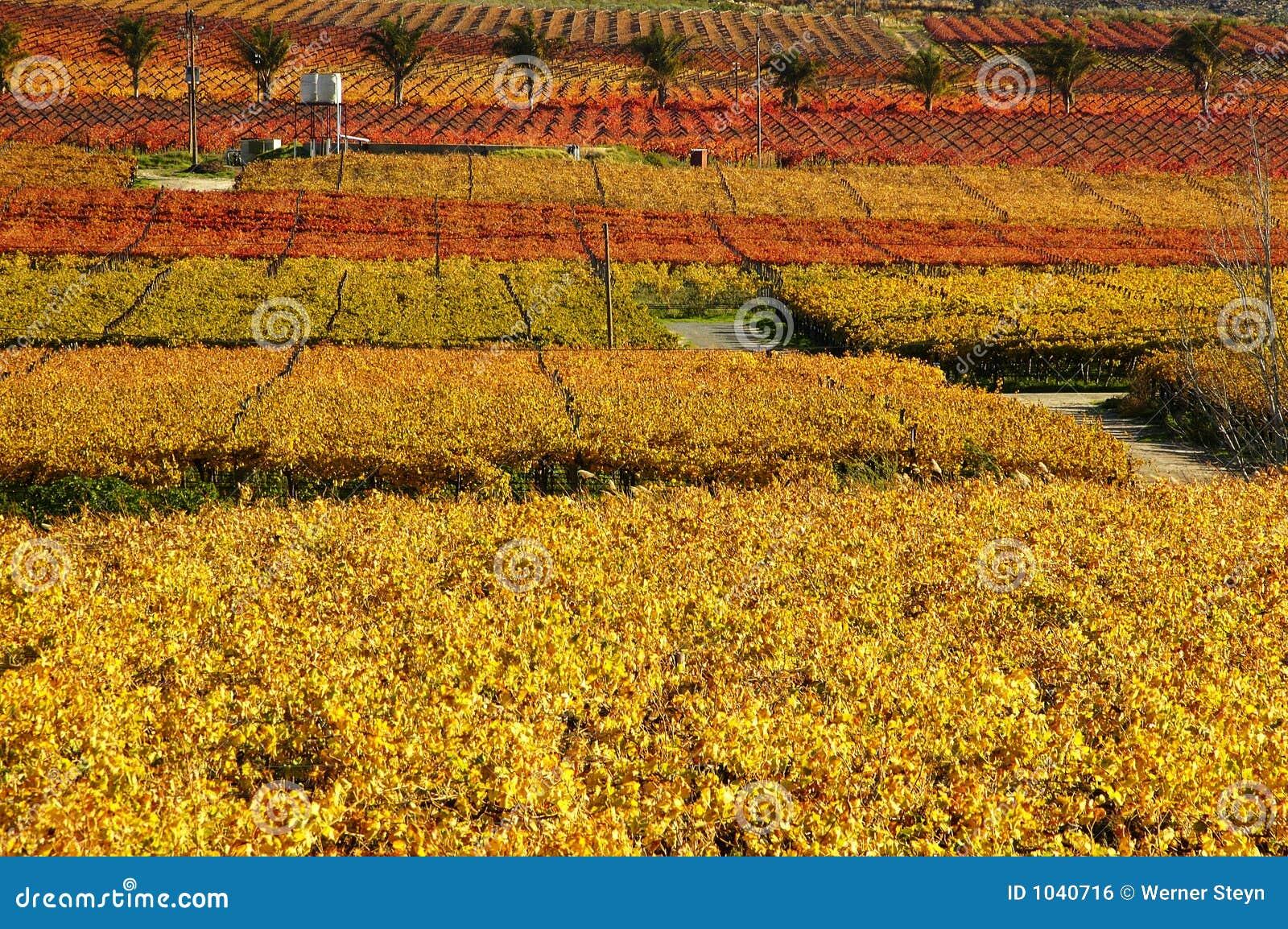 Queda Vineyards16