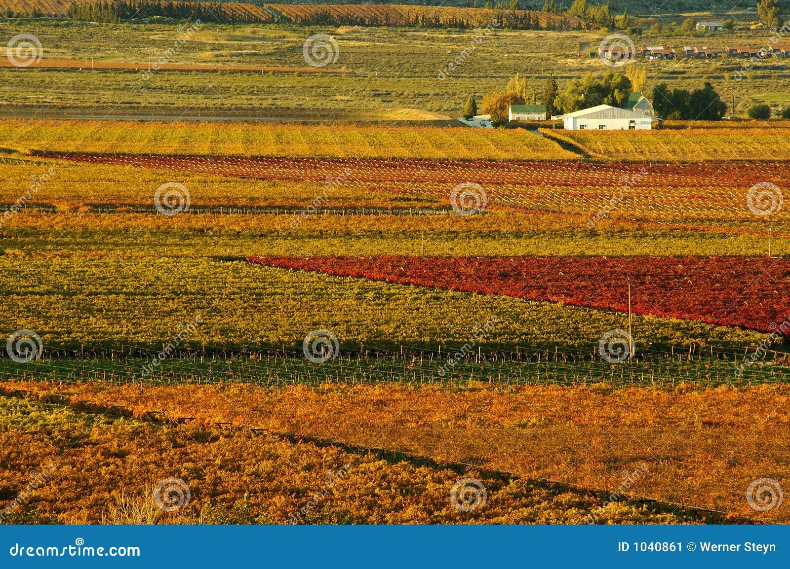Queda Vineyards20