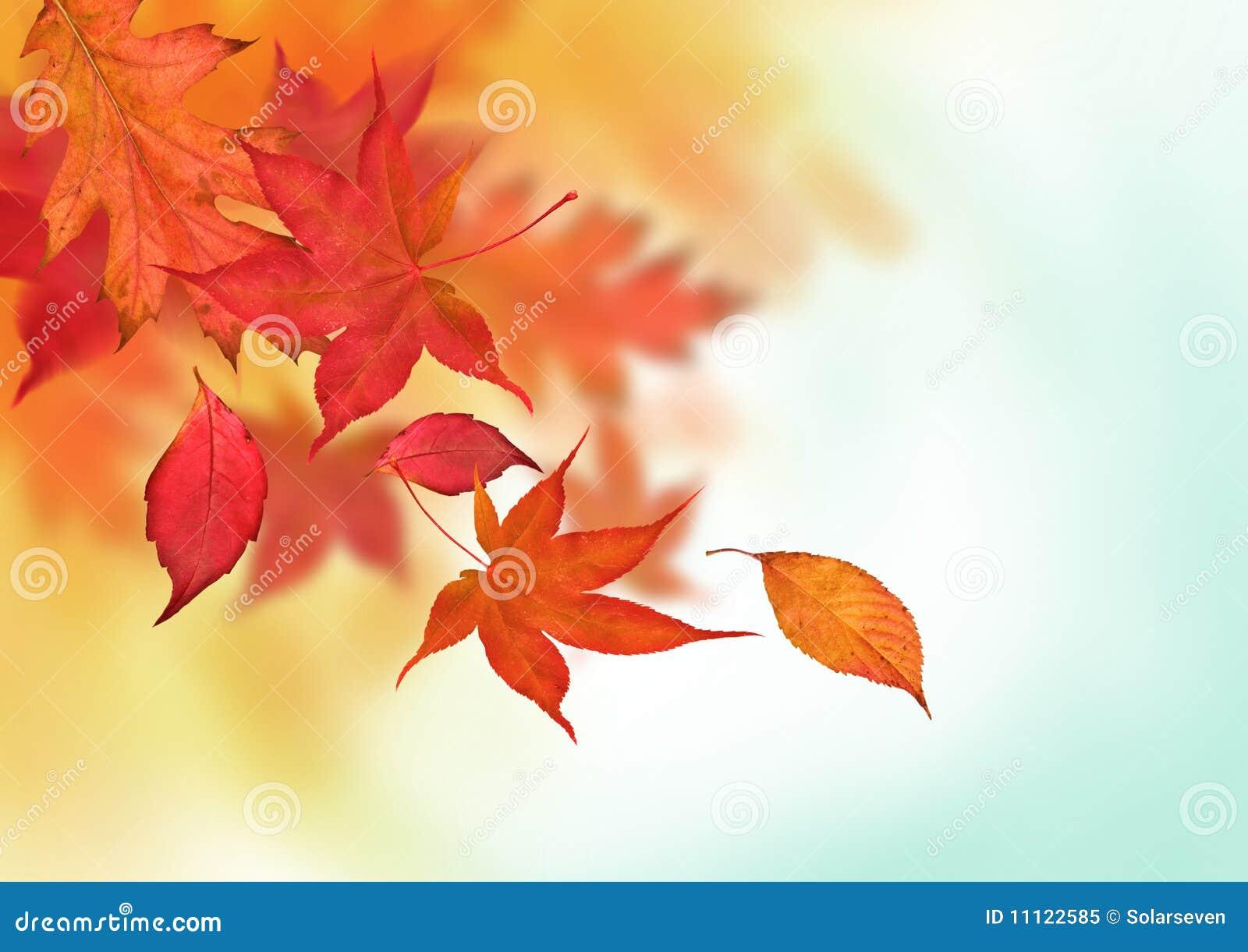 Quedas coloridas do outono