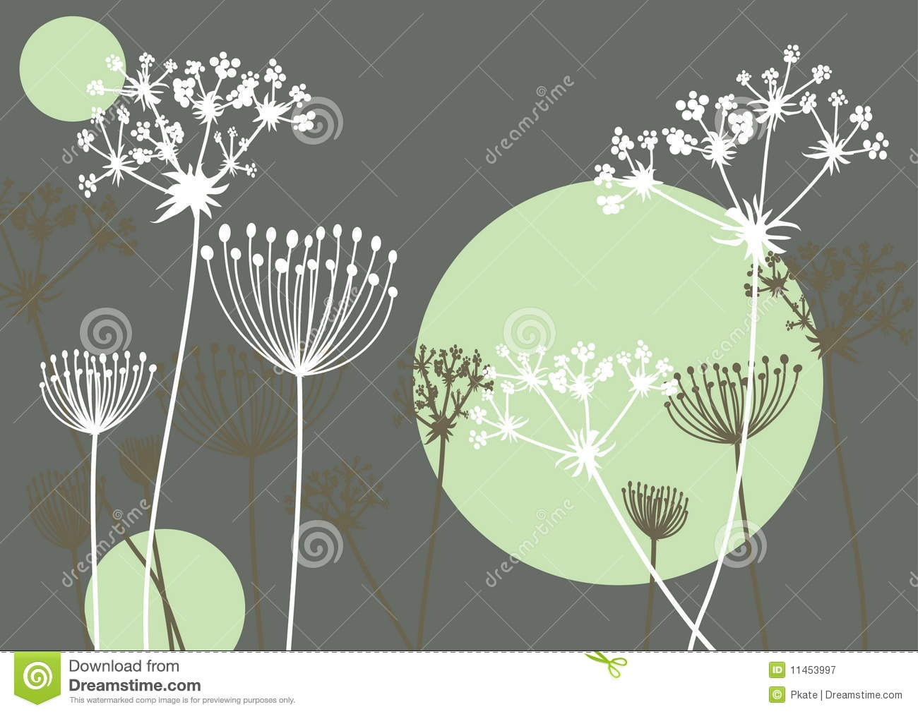 queen annes lace stock vector image of plant queen