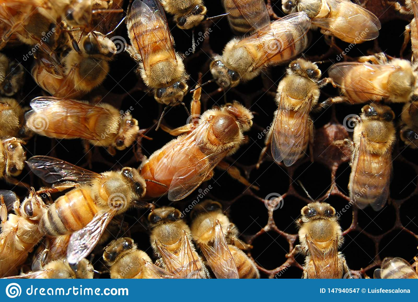 The Queen Bee and her entourage