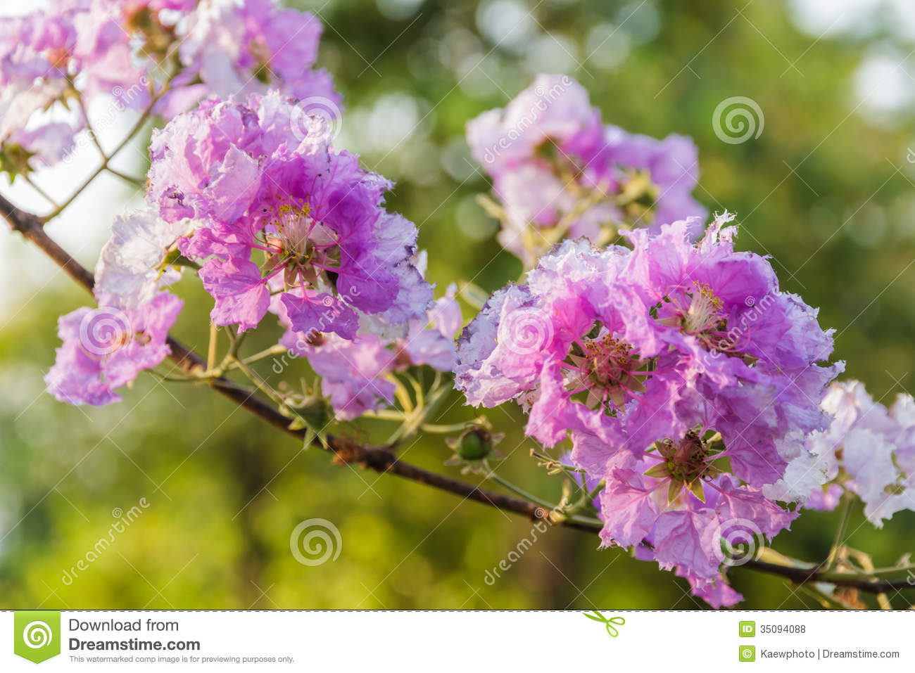 Myrtle Flower Meaning | Flower Meaning