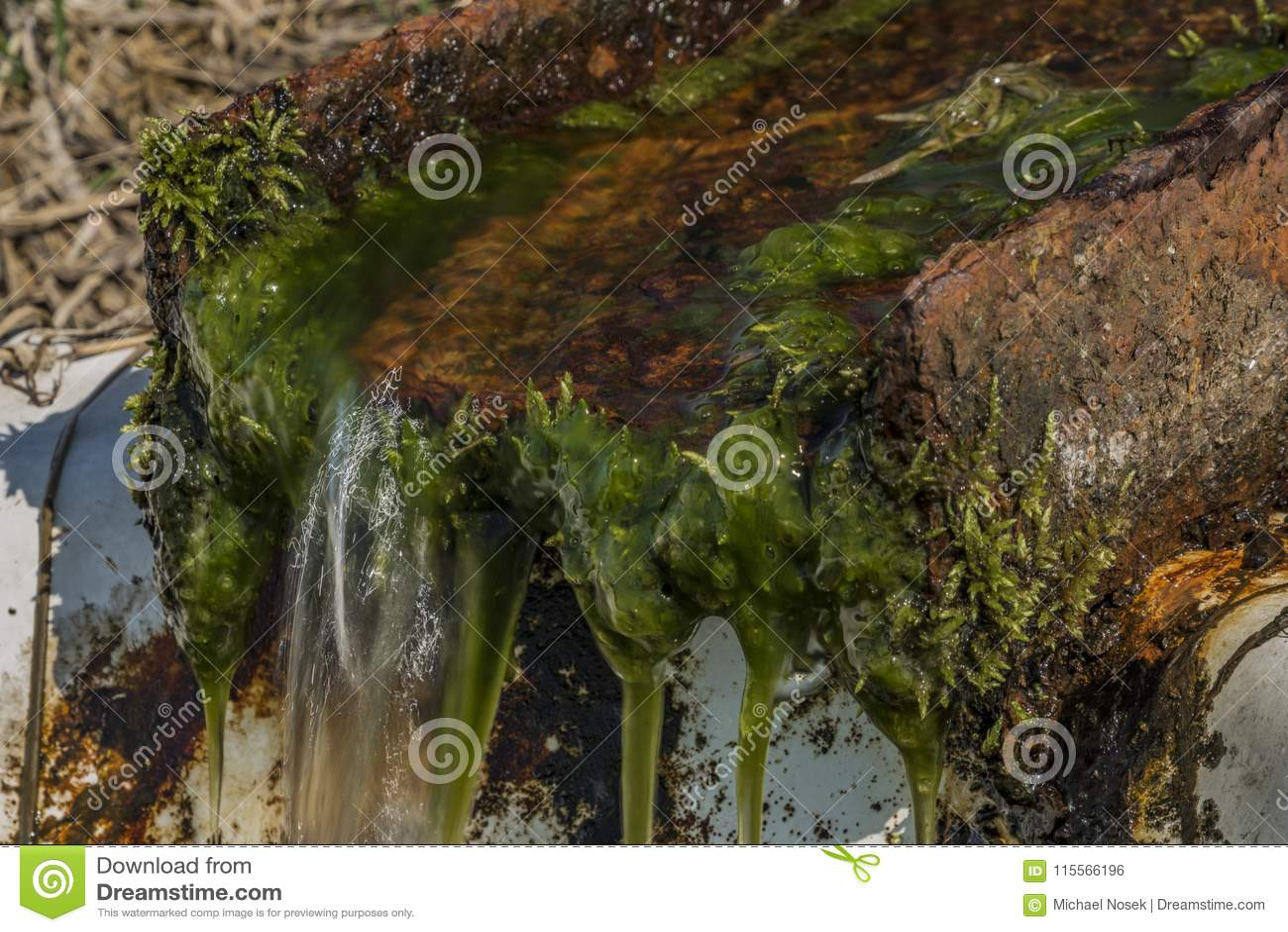 Quelle mit Trinkwasser und Bad auf Frühlingswiese