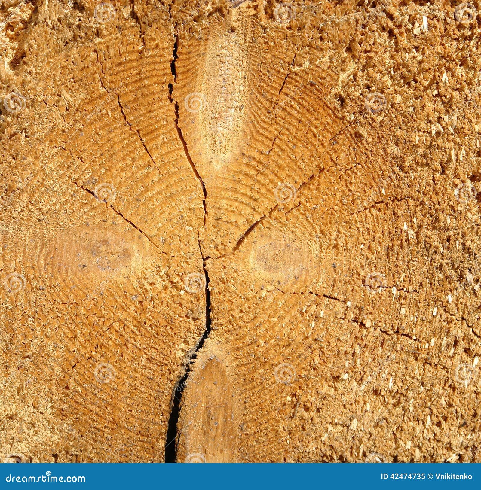 Querschnitt des Baums