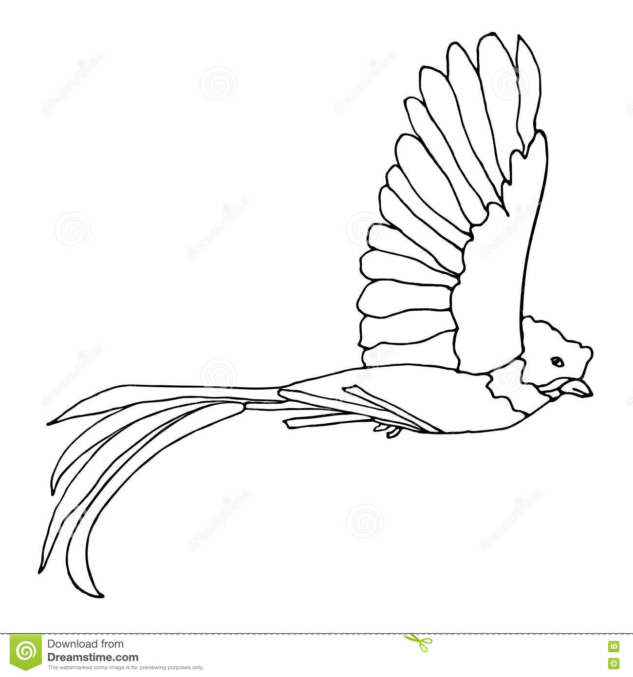 Guatemala Quetzal Bird Coloring Page Coloring Pages