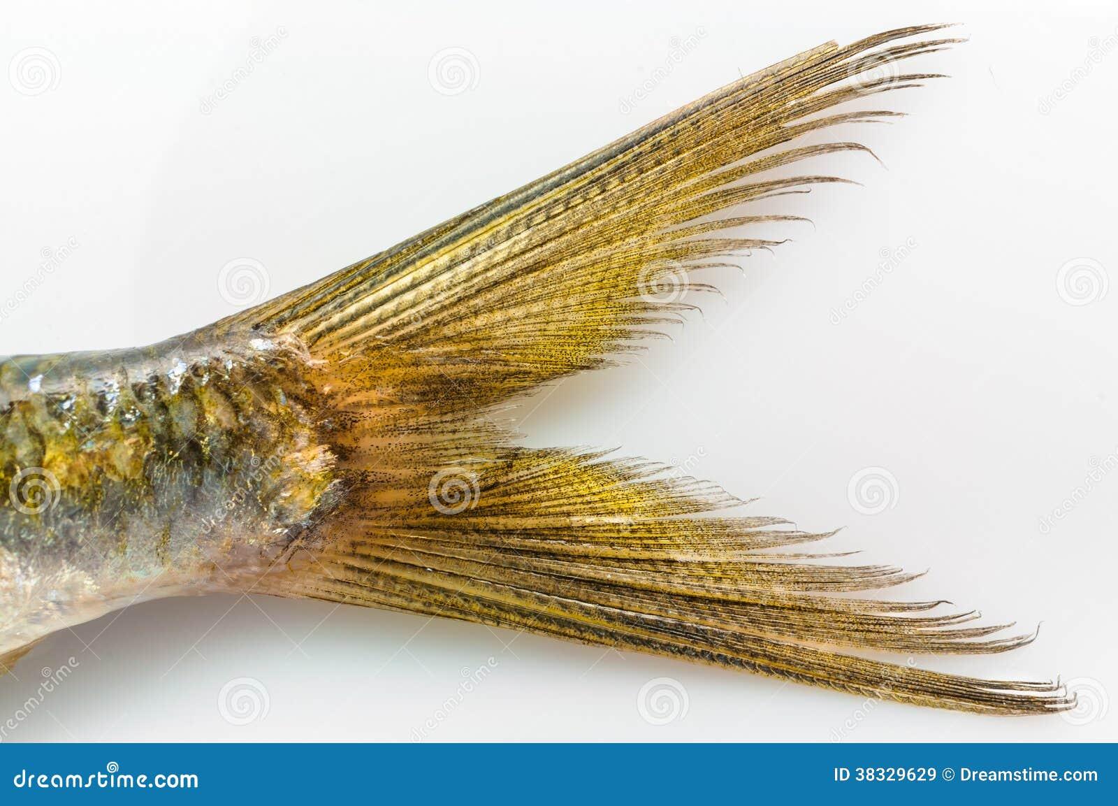 queue de poissons de sardine du plat blanc image stock image 38329629. Black Bedroom Furniture Sets. Home Design Ideas