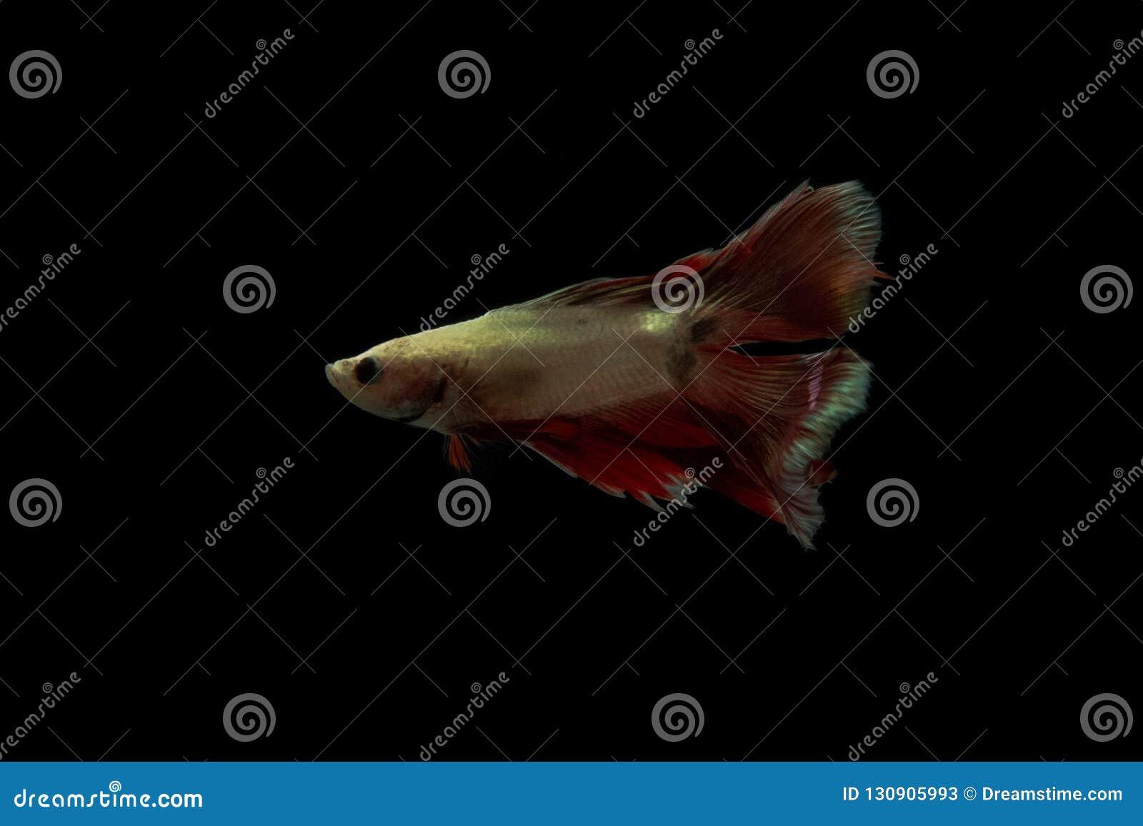 Queue de poissons sur l obscurité