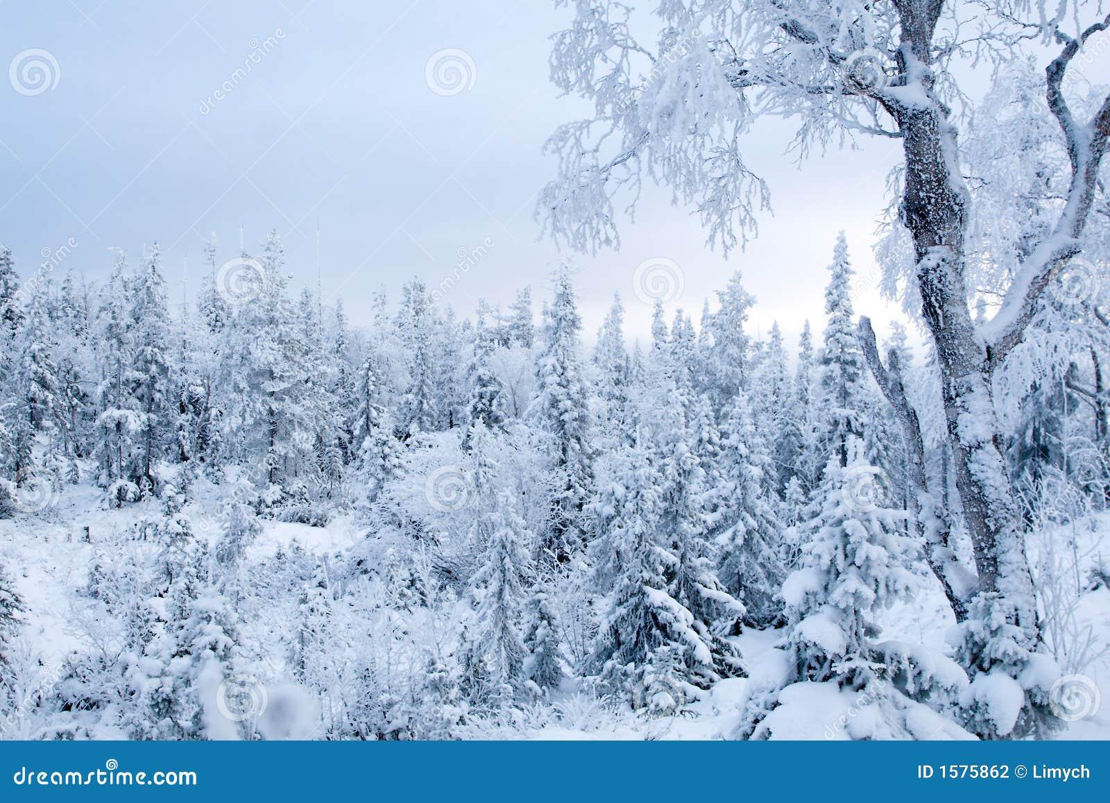 White Christmas Tree Themes