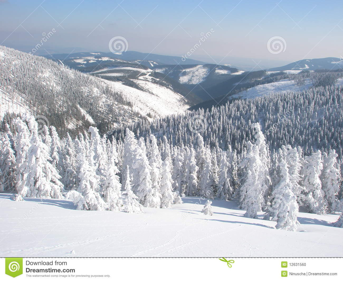 Quiet Winter Snowy Landscape Stock Photo Image 12631560