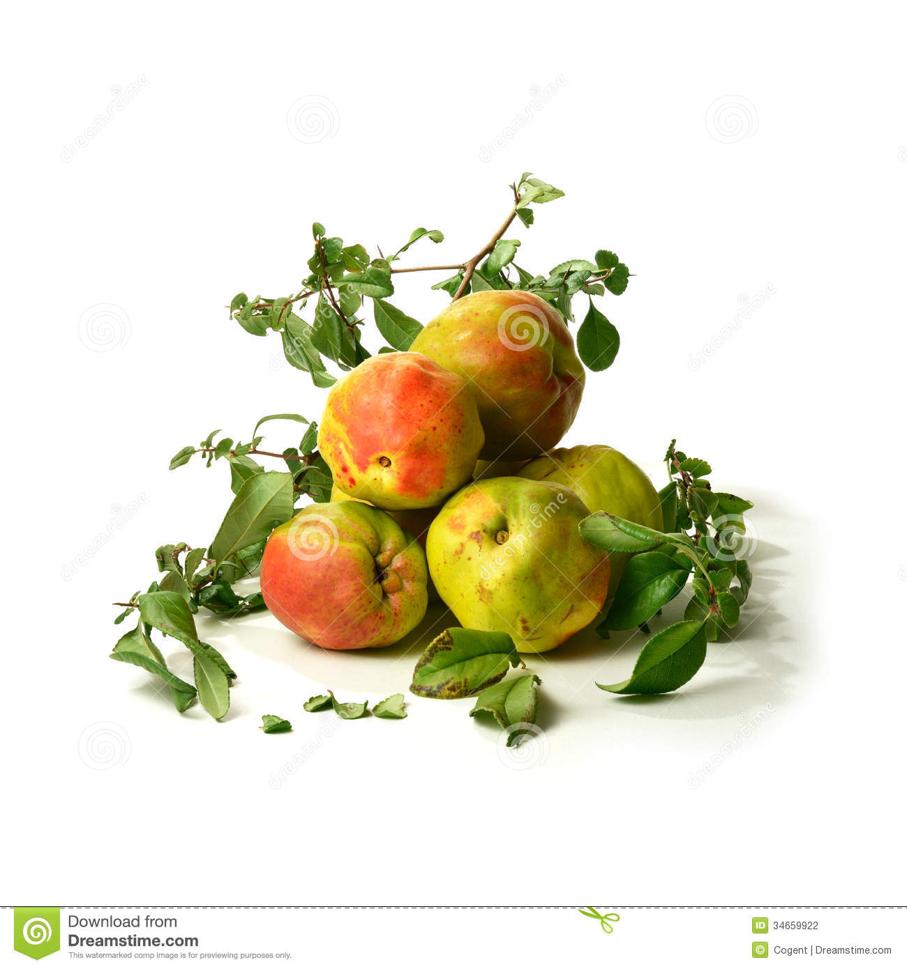 Quince Stock Photography Image 34659922