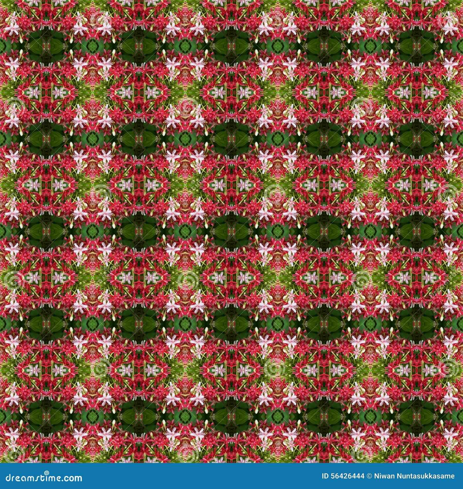 Quisqualis印度的花美丽的花束无缝