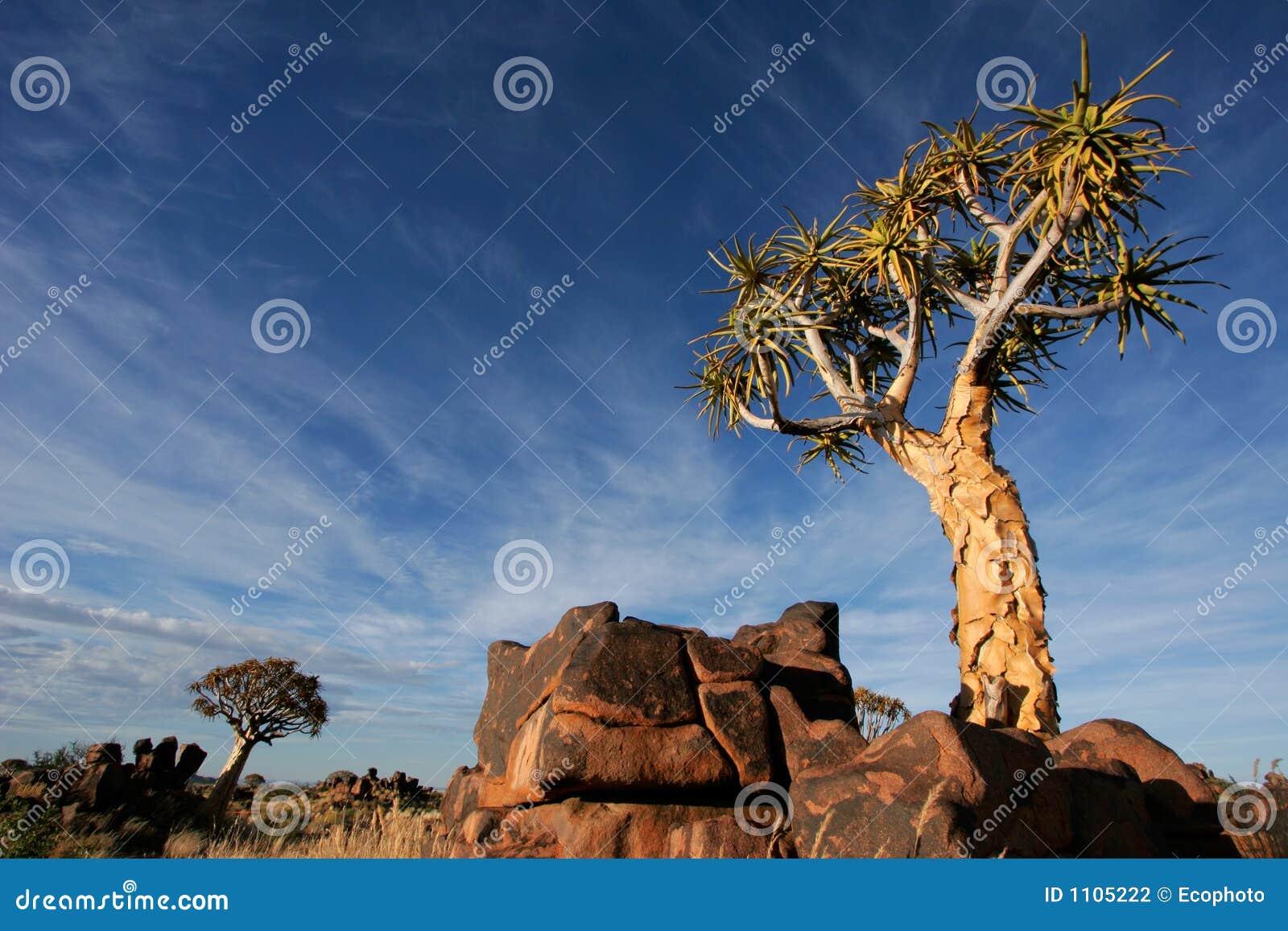 Quiver boomlandschap