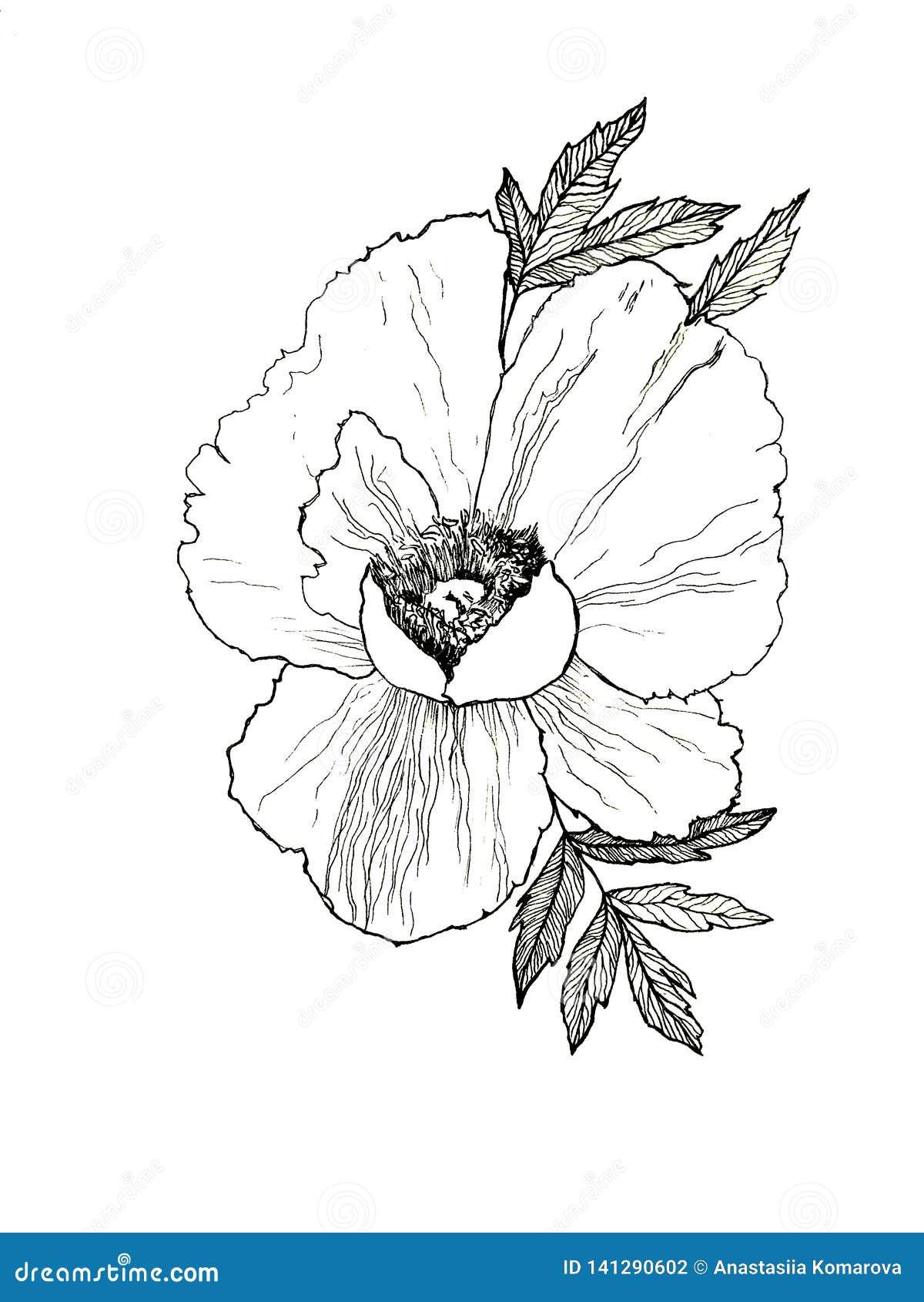 Ręka rysująca ilustracja peonia