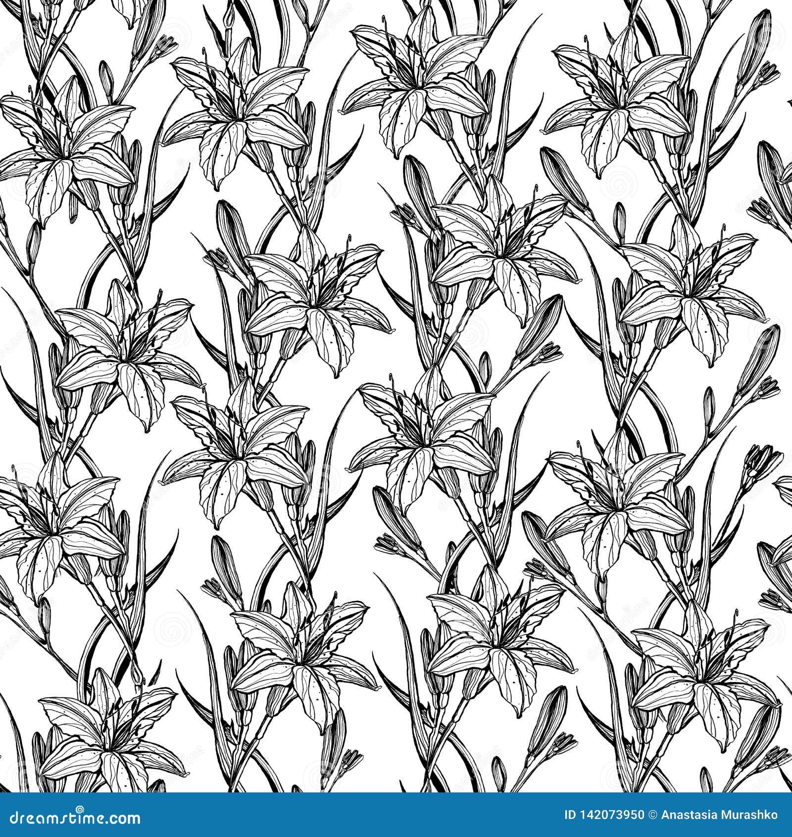 Ręka rysujący bezszwowy wzór z leluja kwiatami