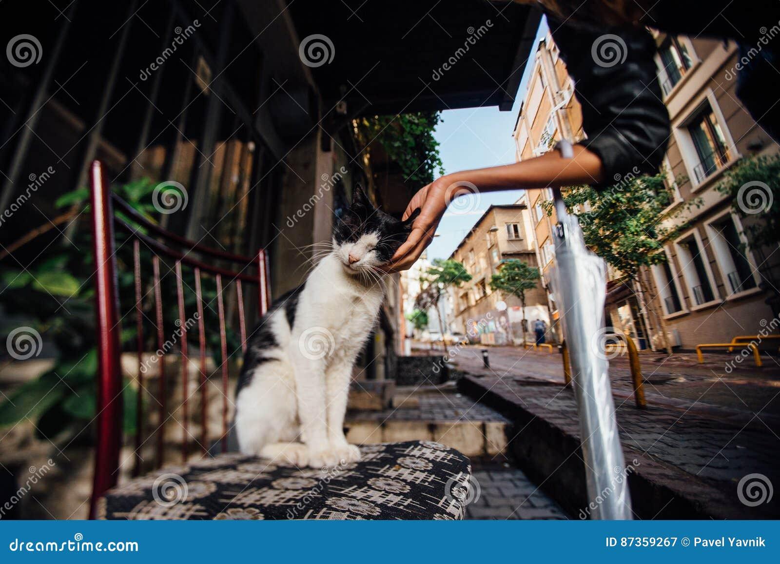 Räcka flickan som slår en gullig katt på en stol på gatan Atmosfär kalkon