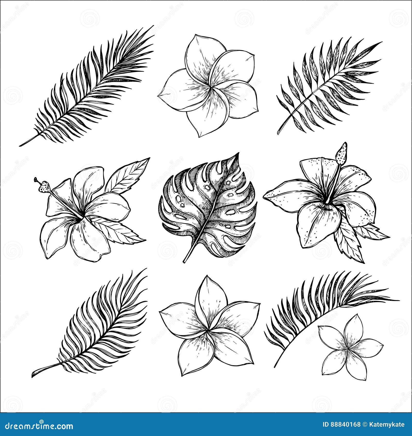Räcka utdragna vektorillustrationer - tropiska blommor och gömma i handflatan kli