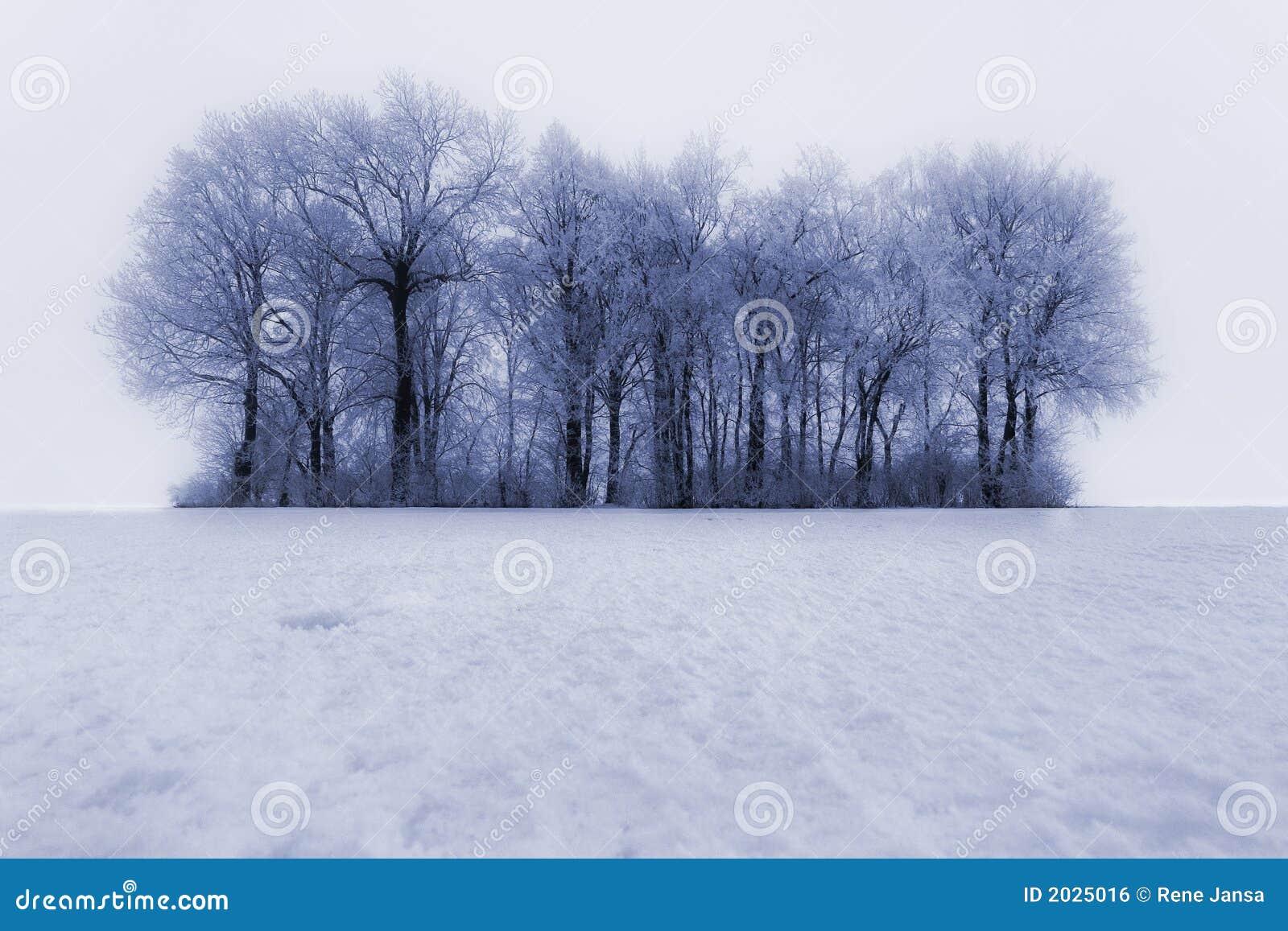 Räknad frosttreesvinter