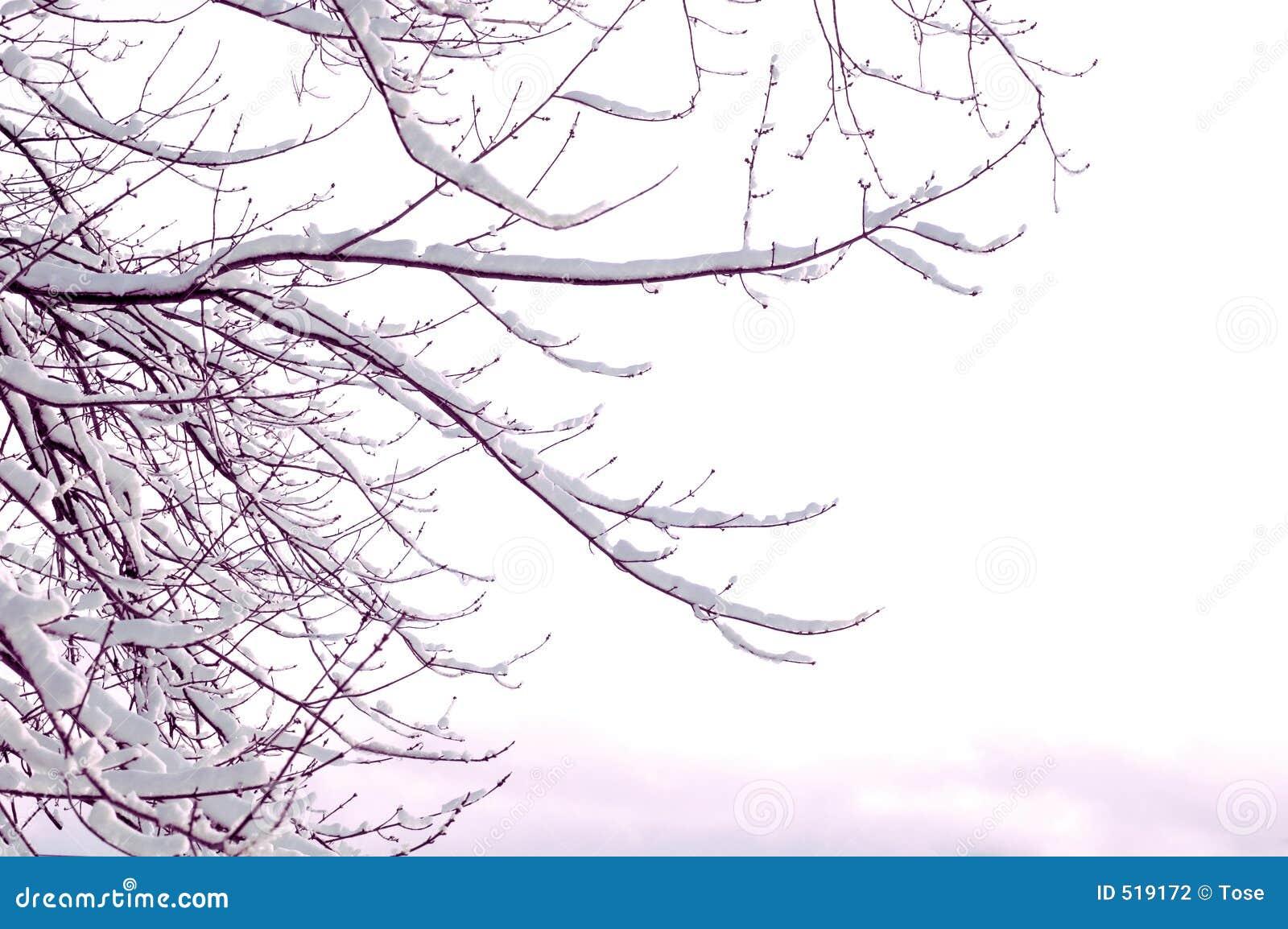 Räknad snowtree