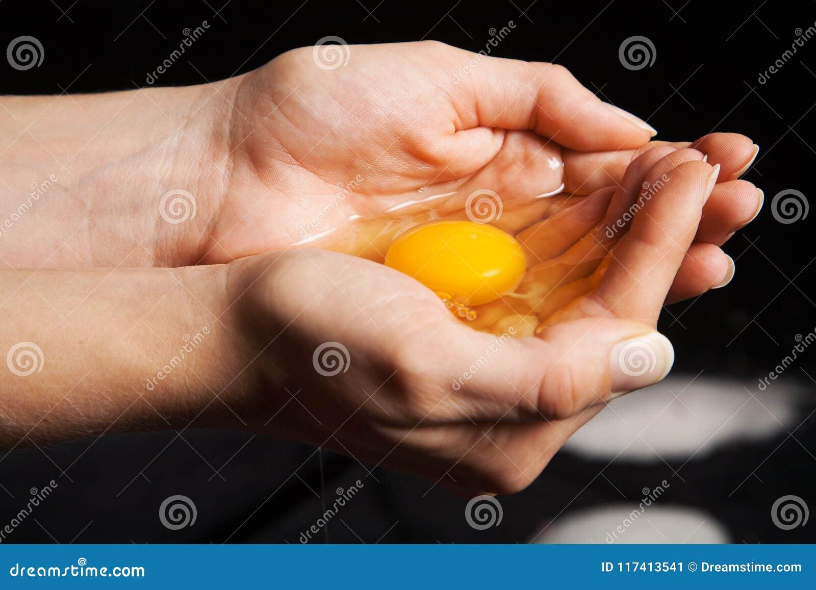 Rått ägg i händer som rymmer och skyddar