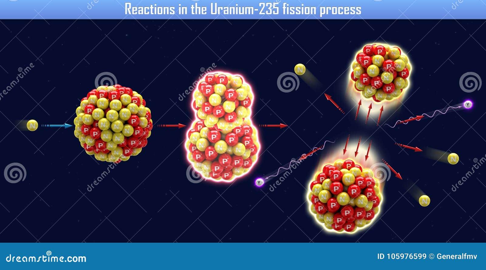 Réactions dans le processus de la fission Uranium-235