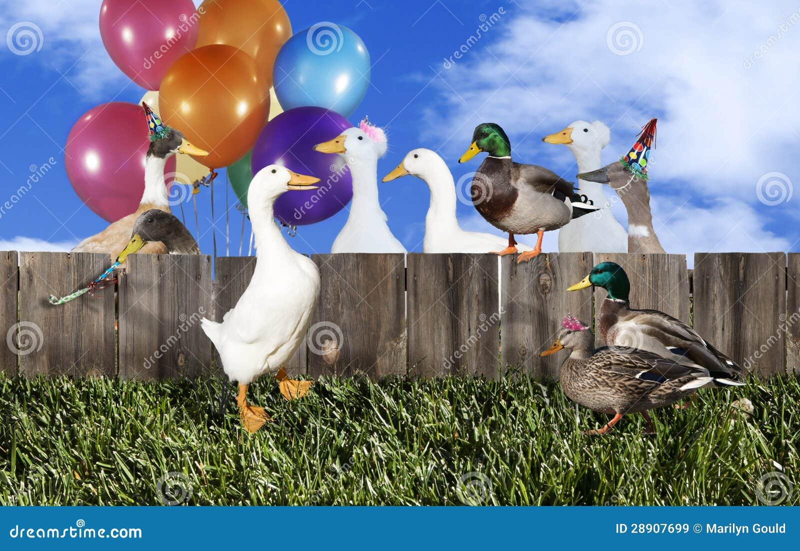 Réception de canard