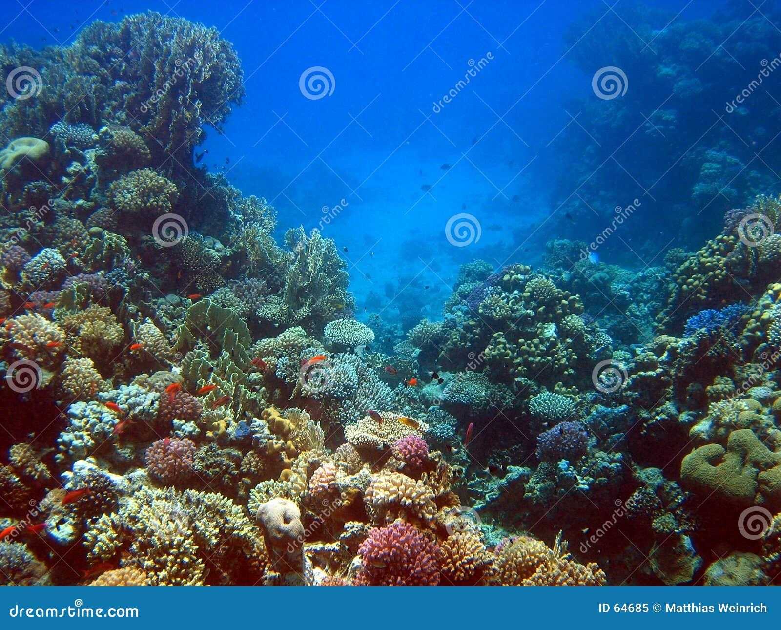 Récif coralien 2