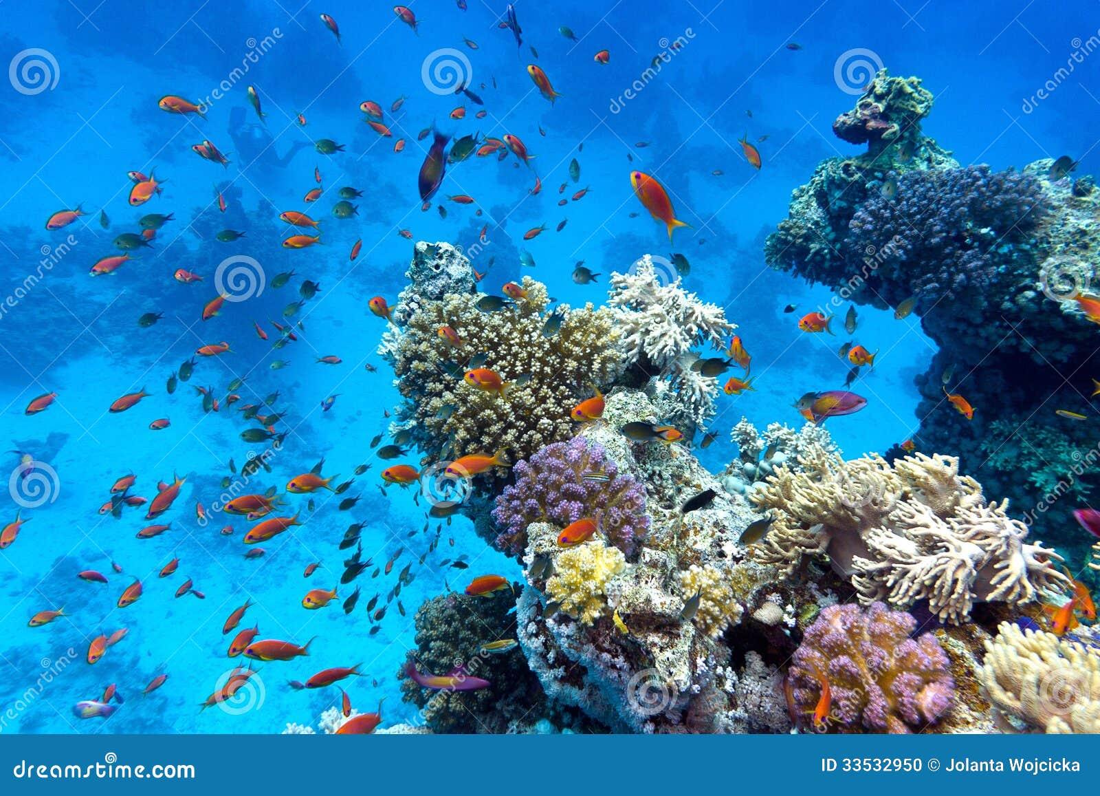 R cif coralien avec les coraux mous et durs avec des for Poisson rouge immobile fond aquarium