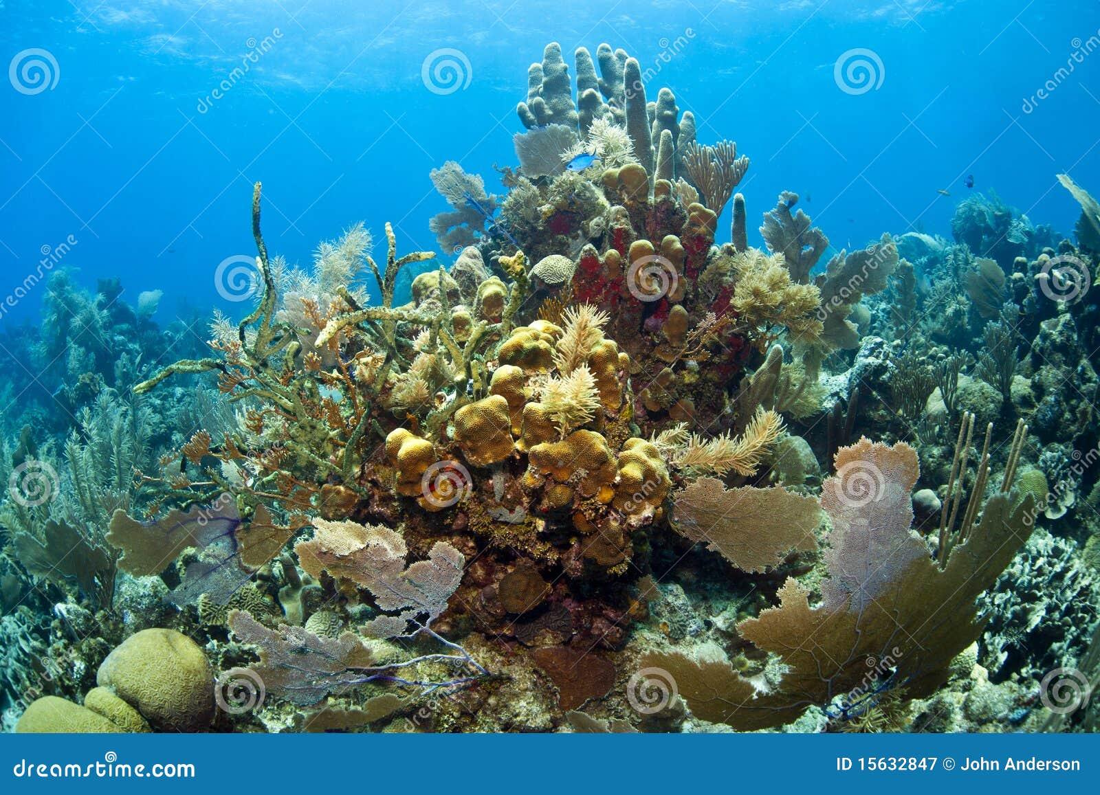 Récif coralien des Caraïbes