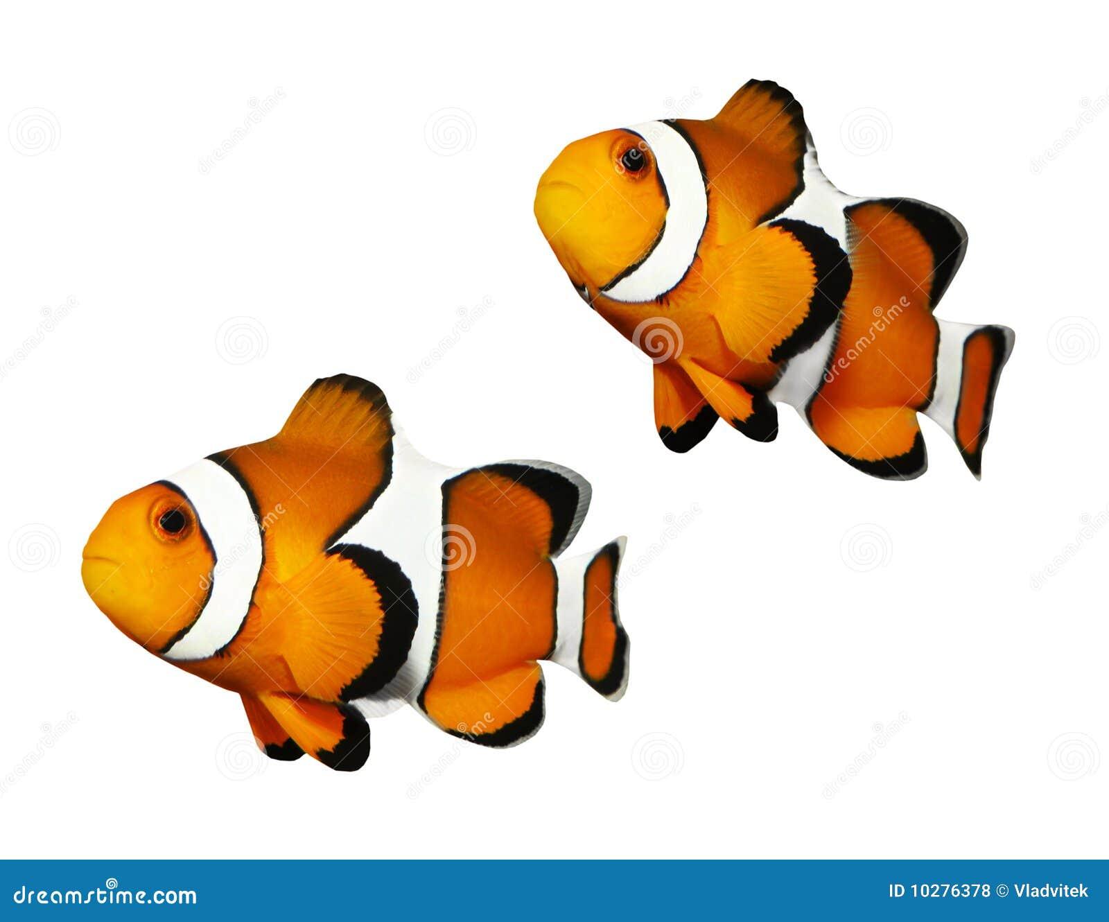 Récif de poissons tropical