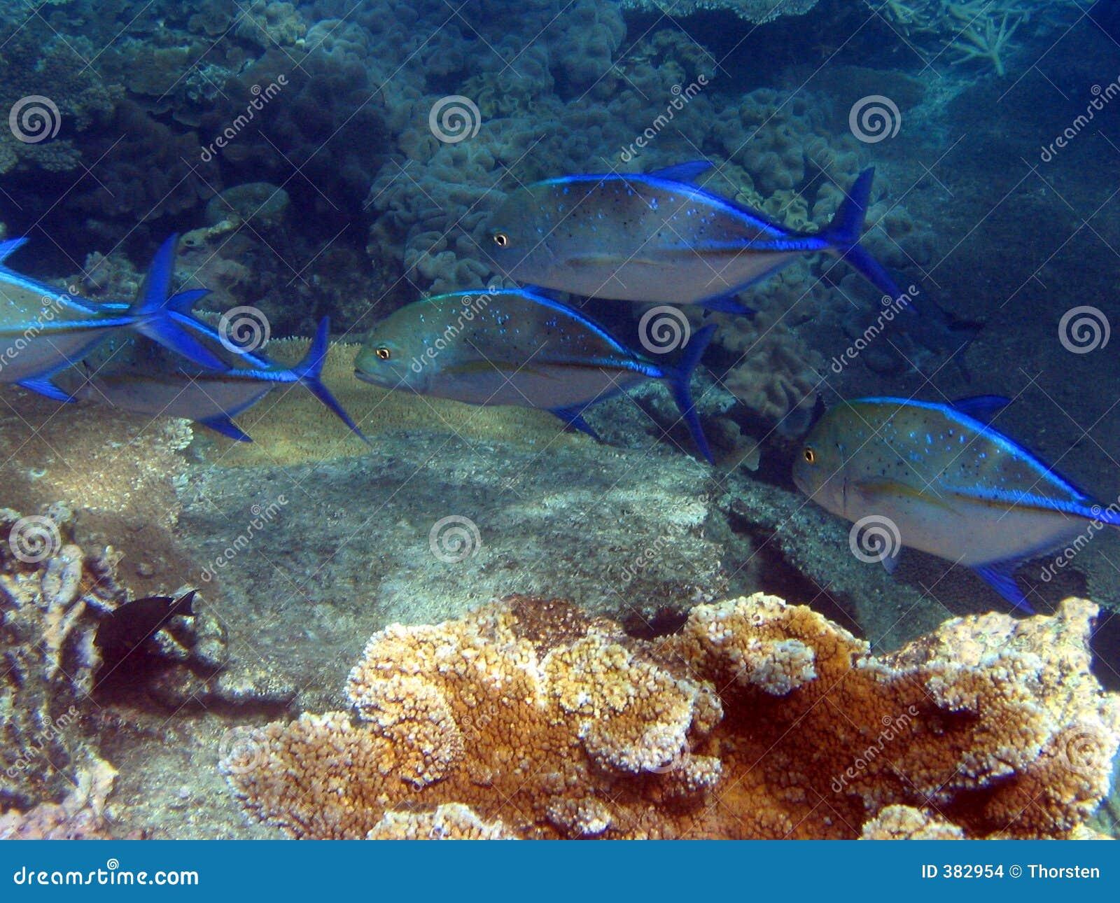 Récif grand de barrière sous-marin