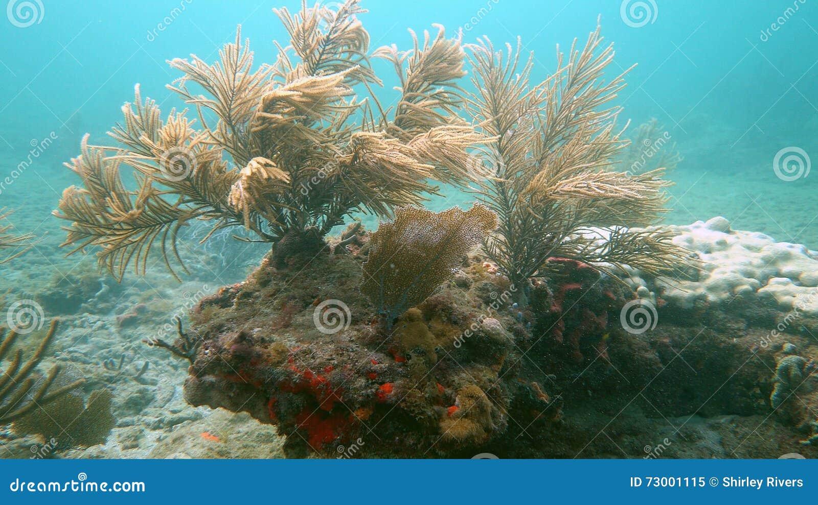 Récif peu profond en plage de Pompano, FL