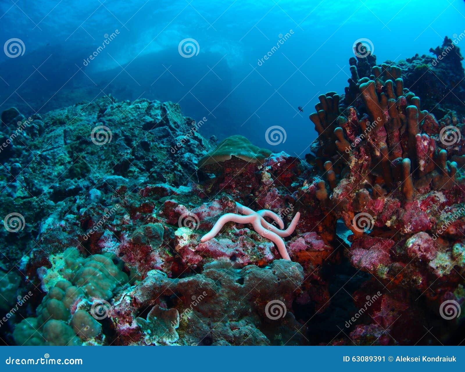 Download Récif sous des vagues image stock. Image du sous, corail - 63089391