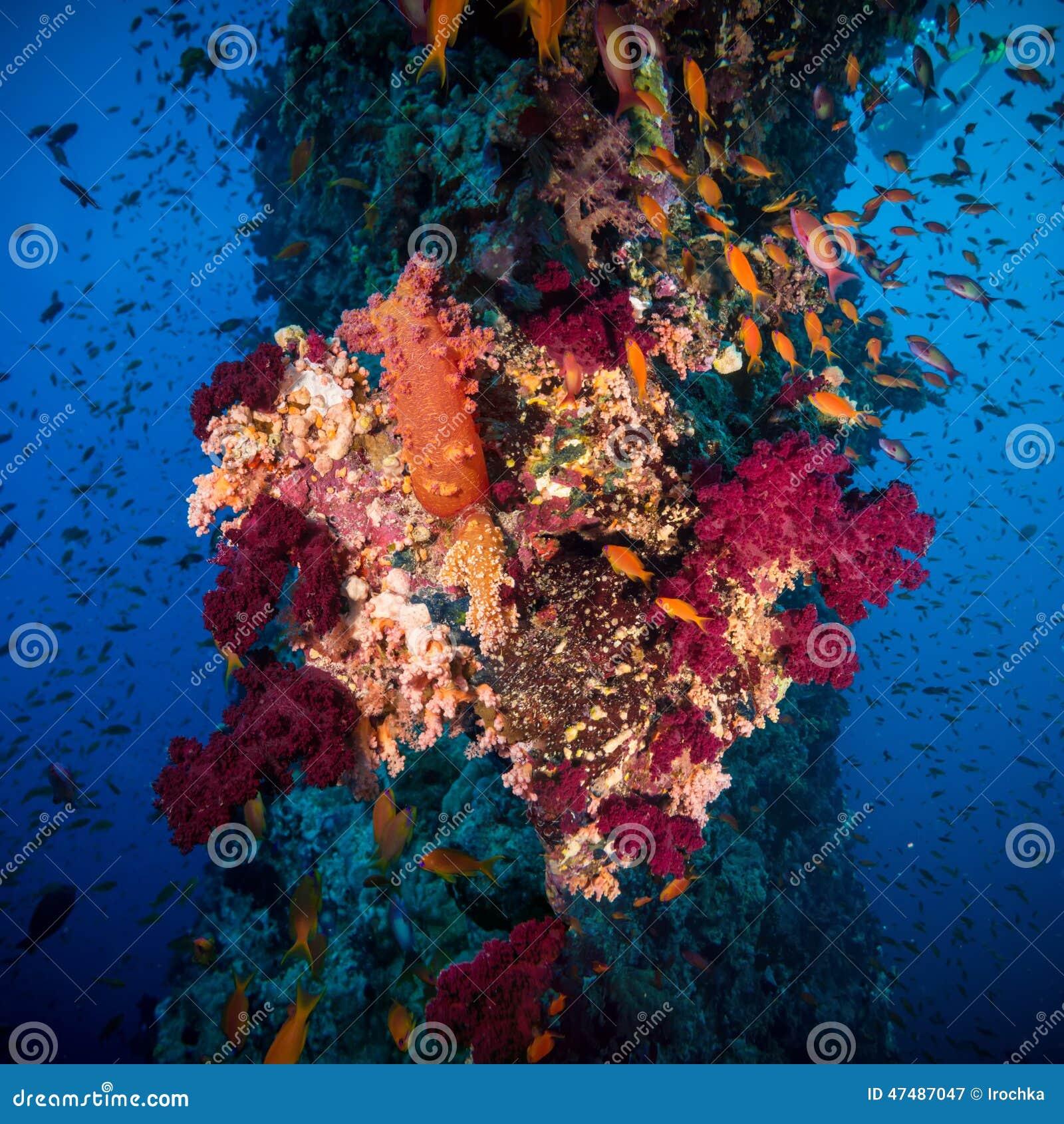 Récif sous-marin coloré avec le corail et les éponges