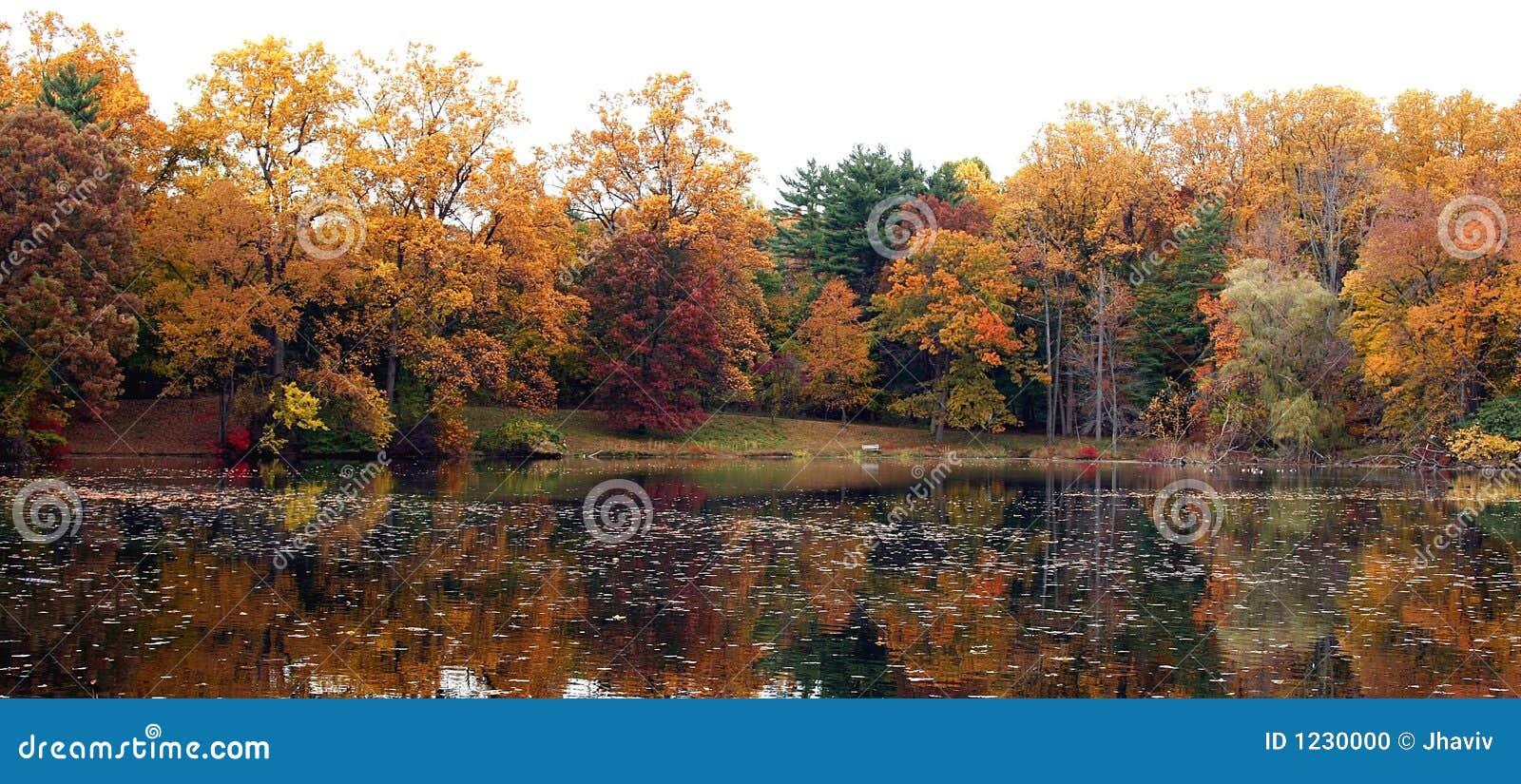 Réflexion d automne