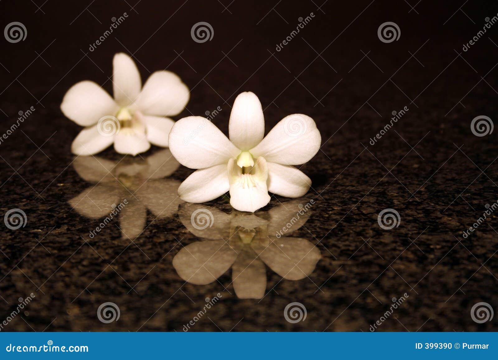 Réflexion d orchidée