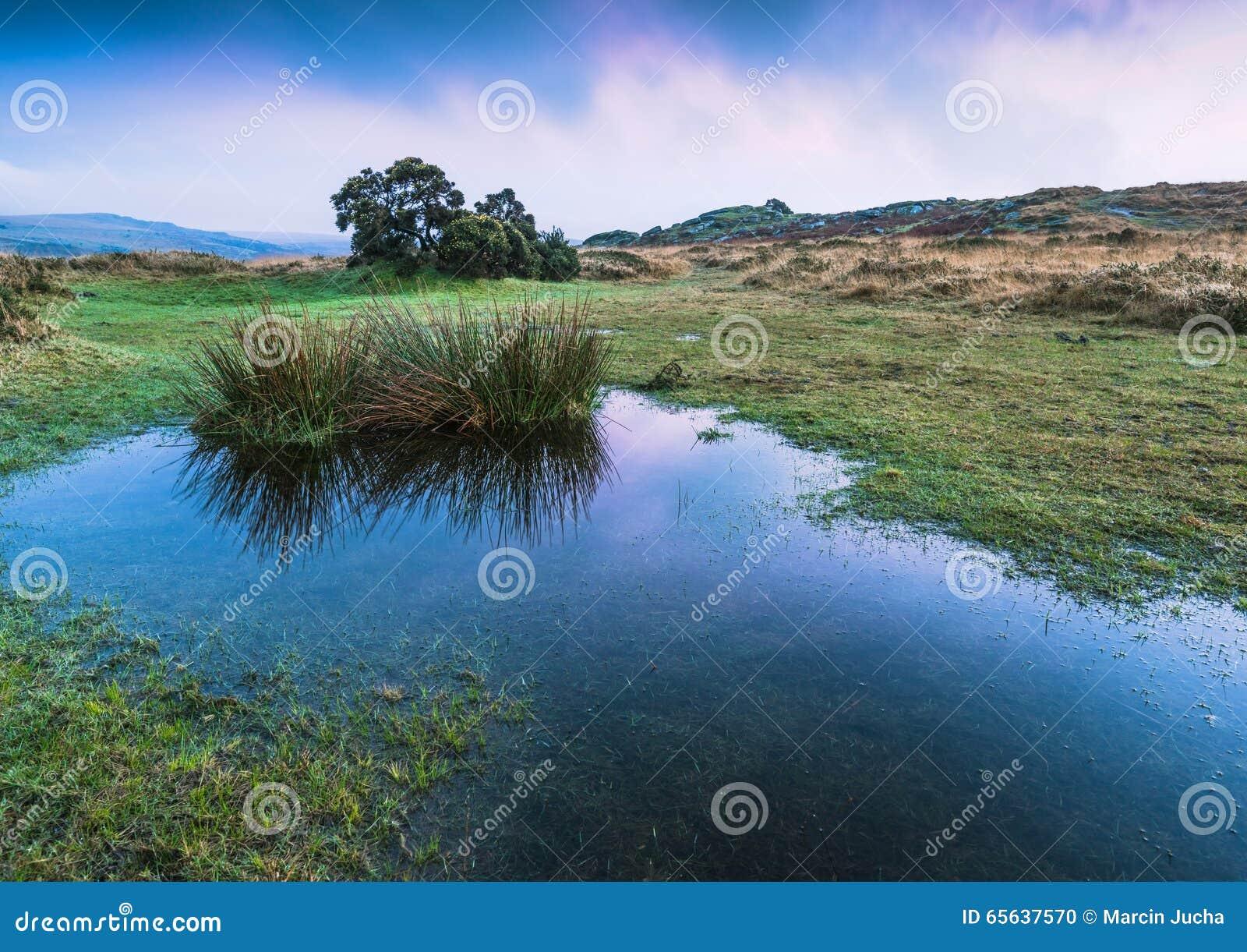 Réflexion de ciel dans l étang sauvage