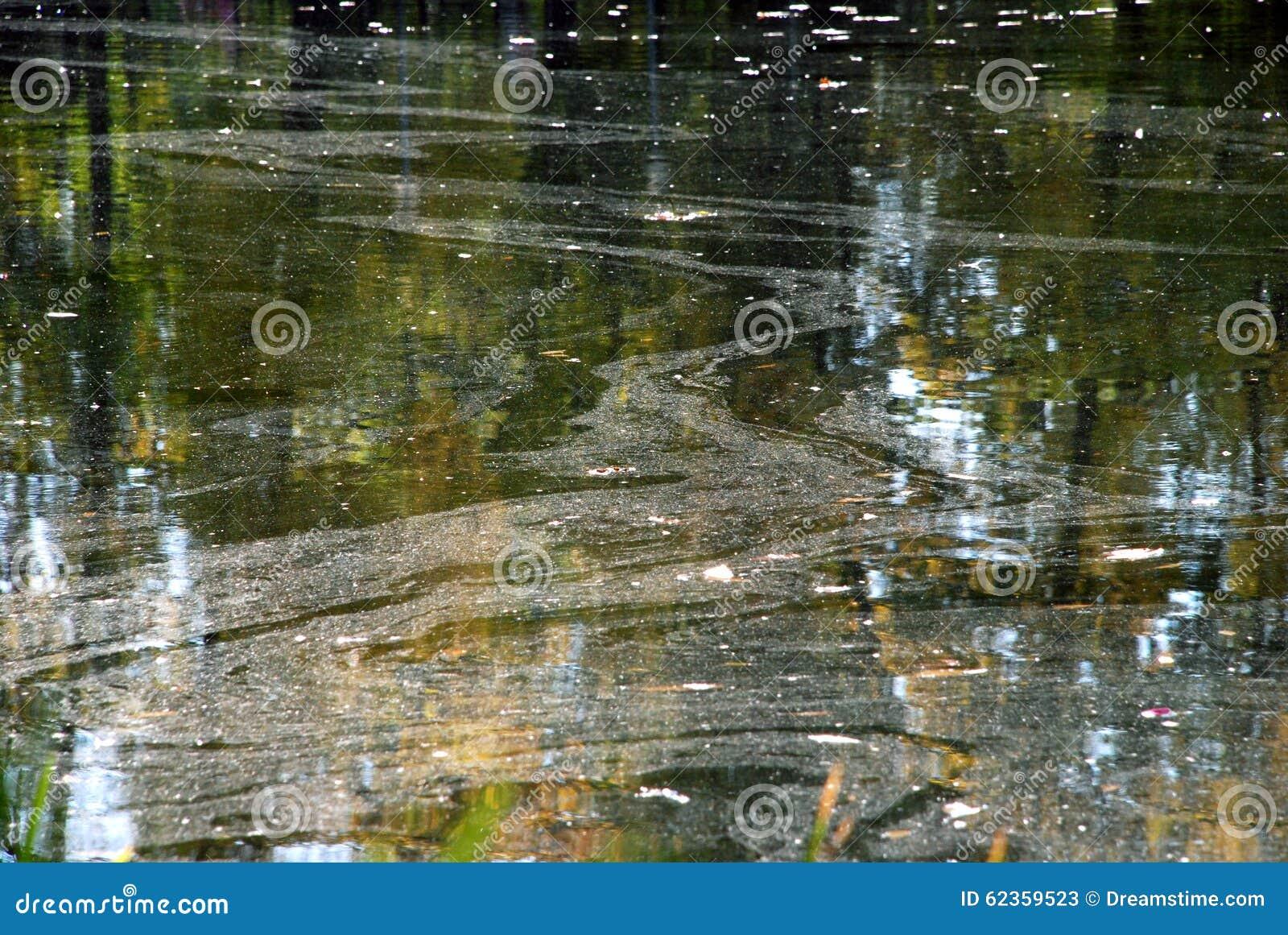 Réflexion des arbres dans l eau