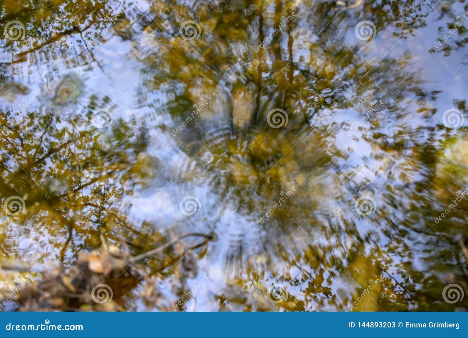R?flexion des arbres dans l eau d un courant avec les cercles sph?riques des gouttes de pluie en baisse