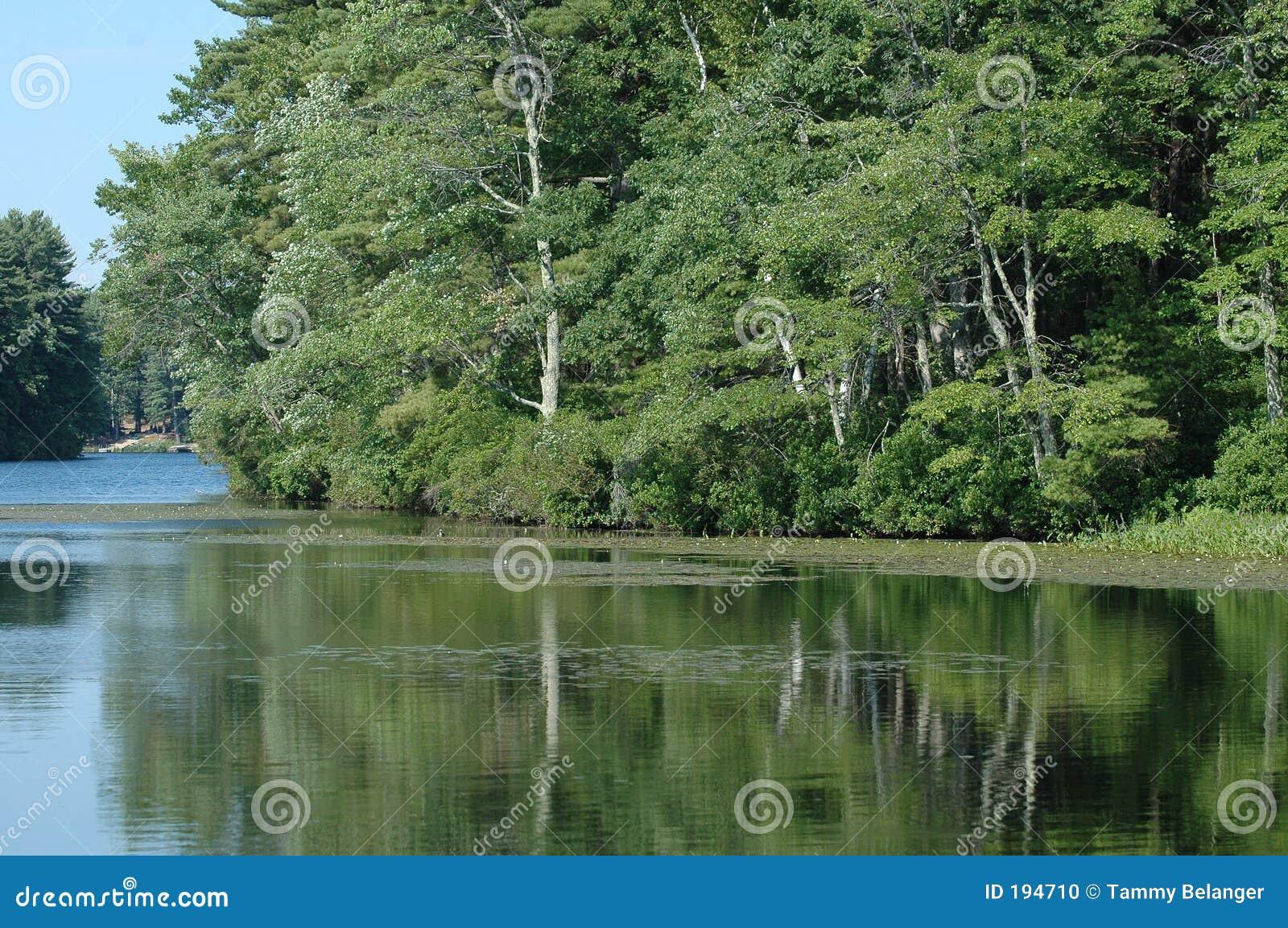 Réflexions d étang.
