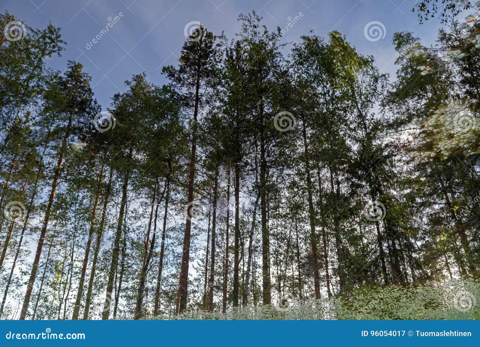 Réflexions des arbres dans l eau