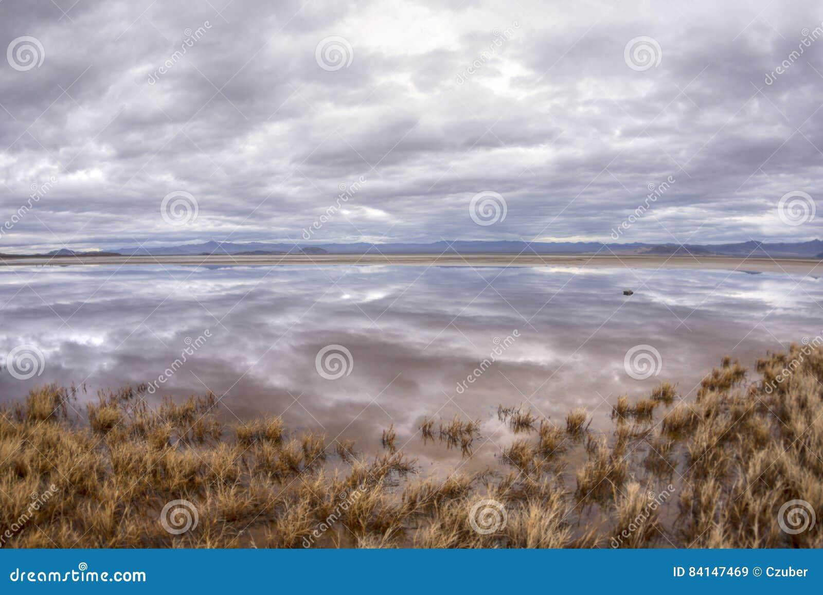 Réflexions sur l oasis de désert